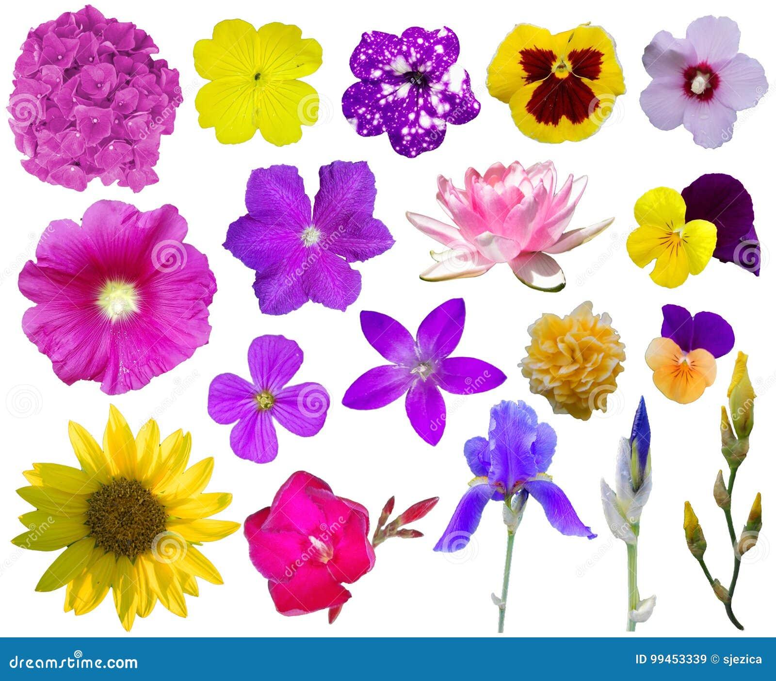 Blumen-Ansammlung 2