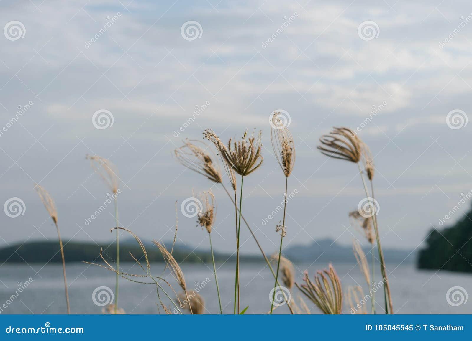 Blumen auf dem See morgens