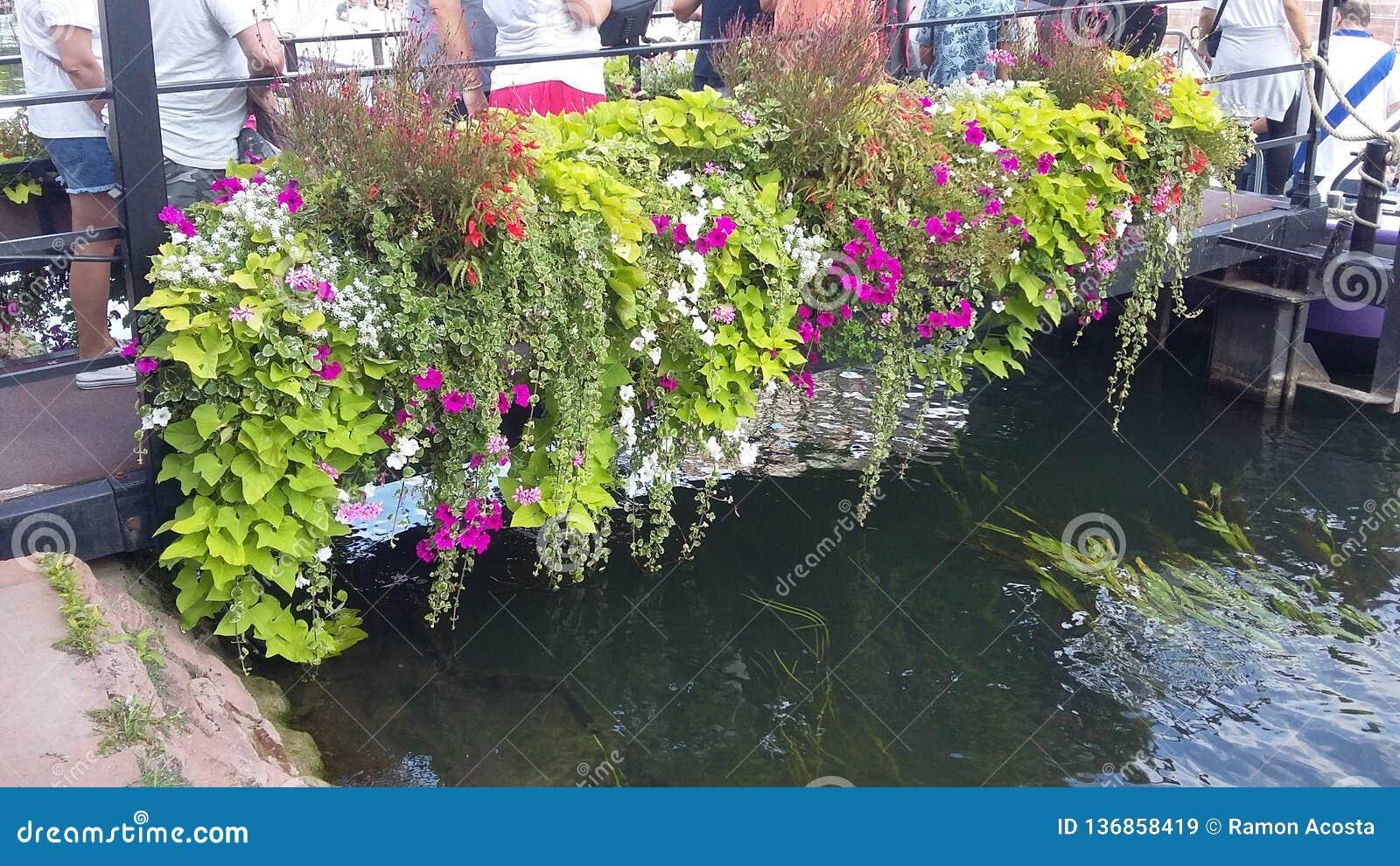 Blumen auf Wasserstraße