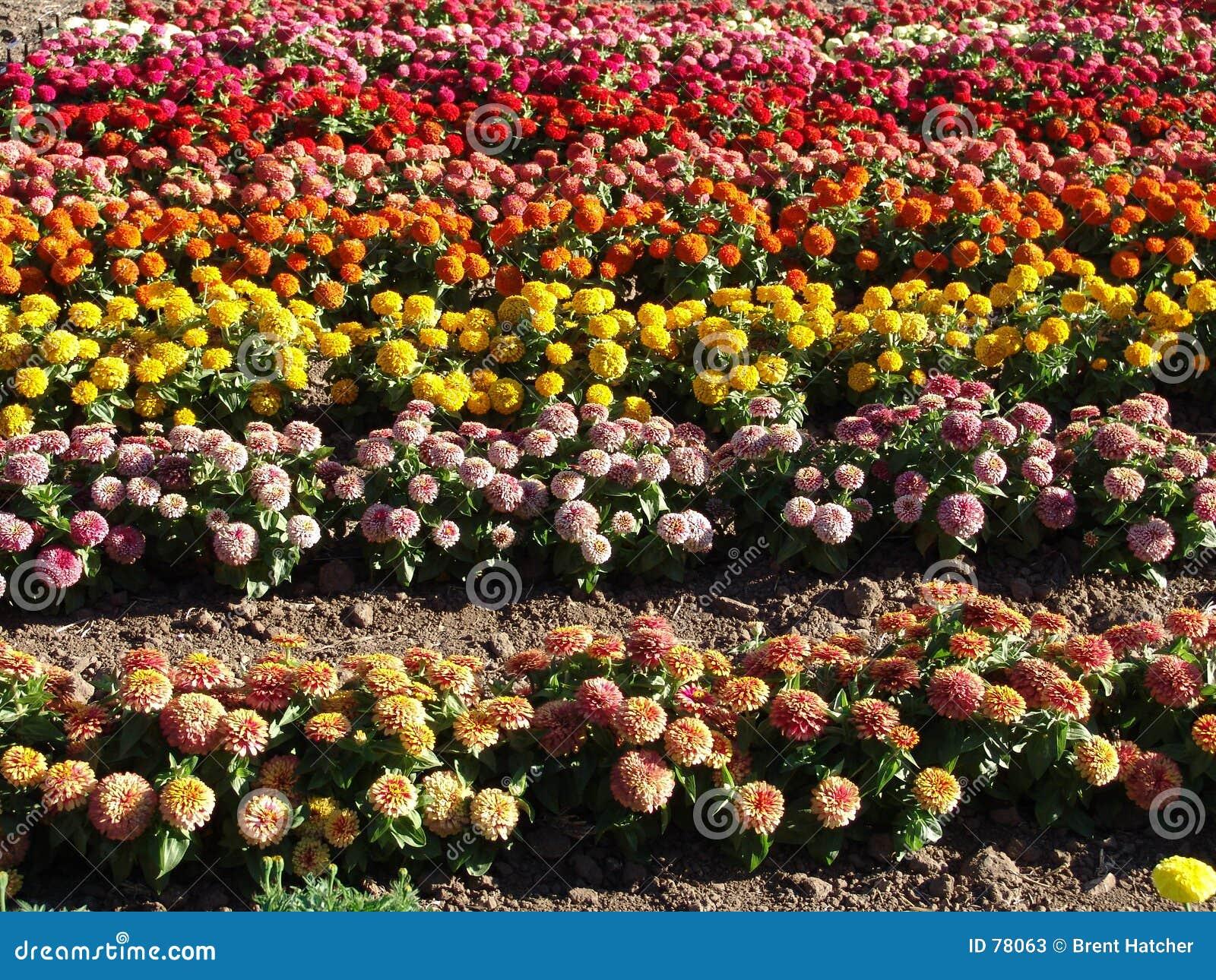 Blumen-Bauernhof