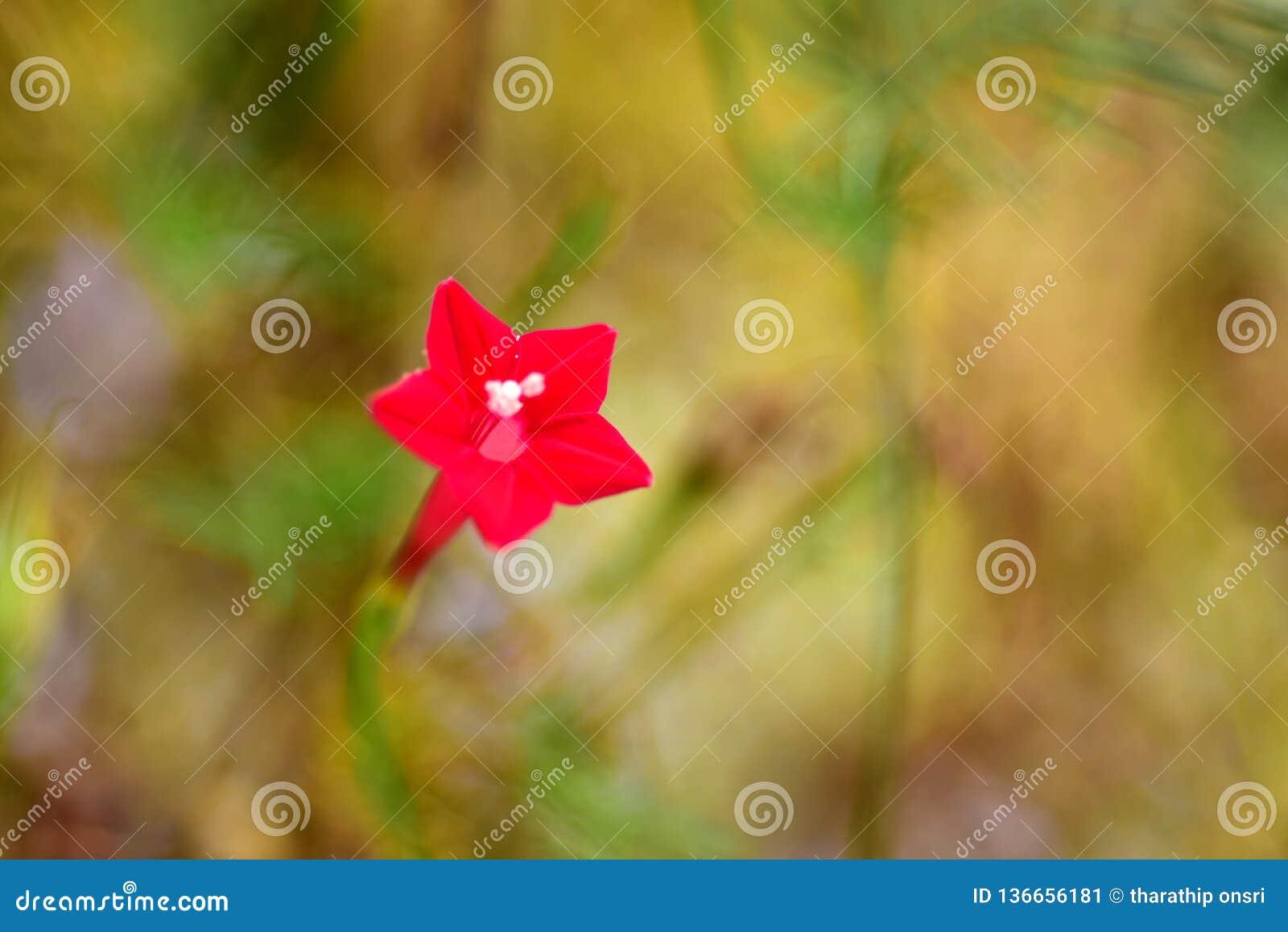 Blumen blühen und die Bienen