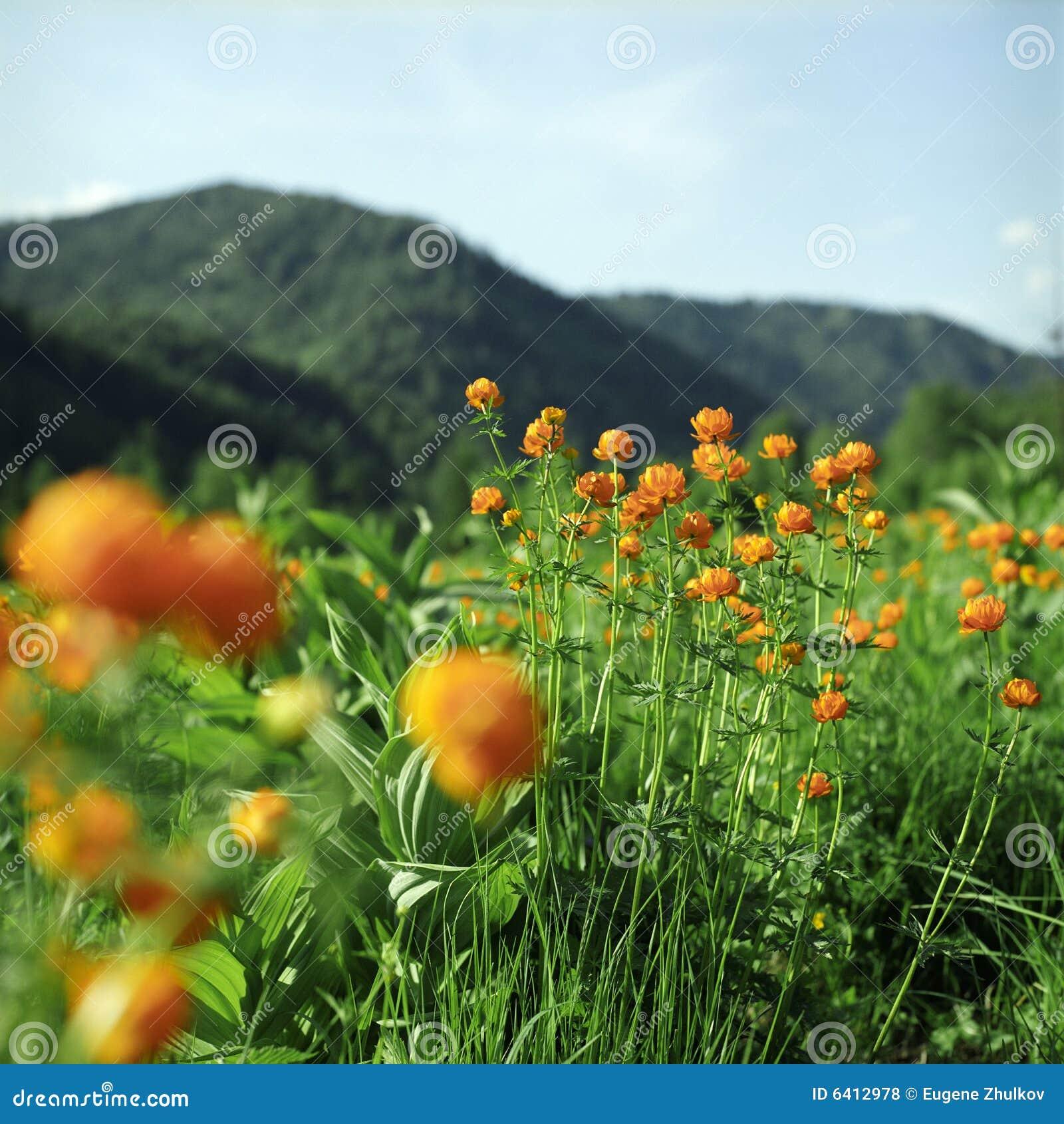 Blumen in den hohen Bergen