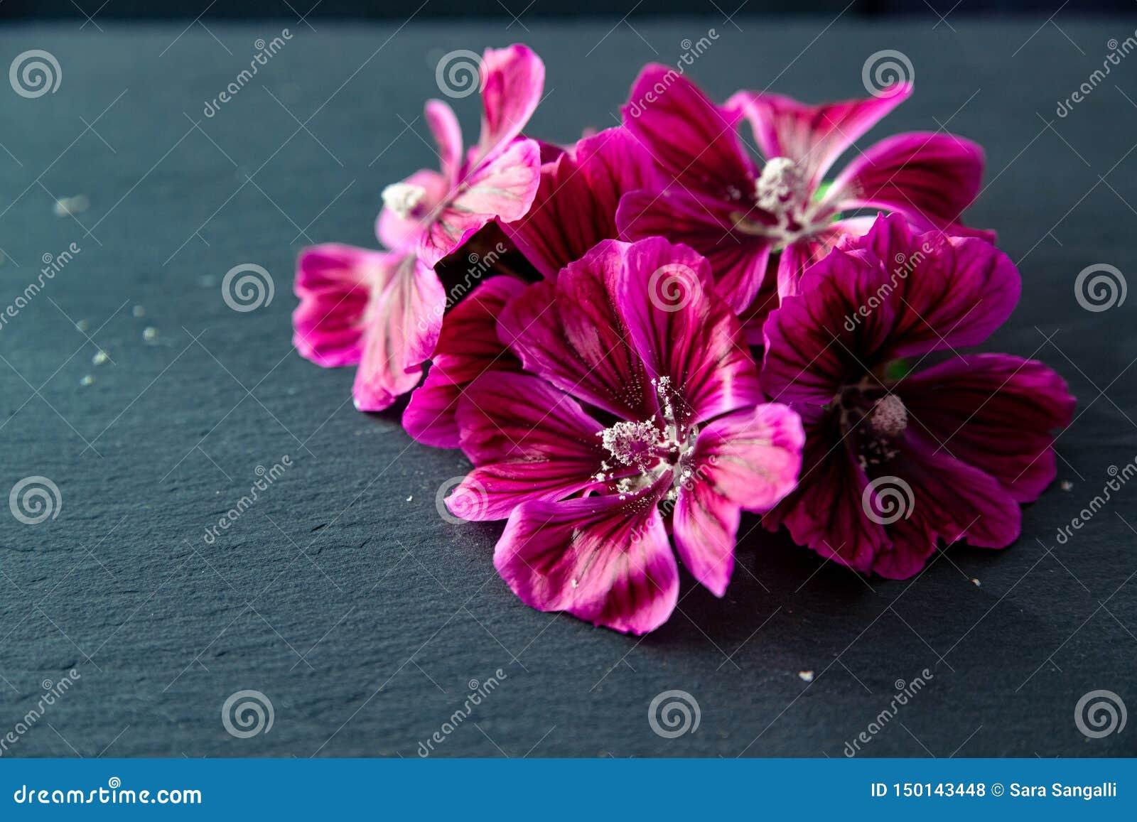 Blumen der allgemeinen Malve