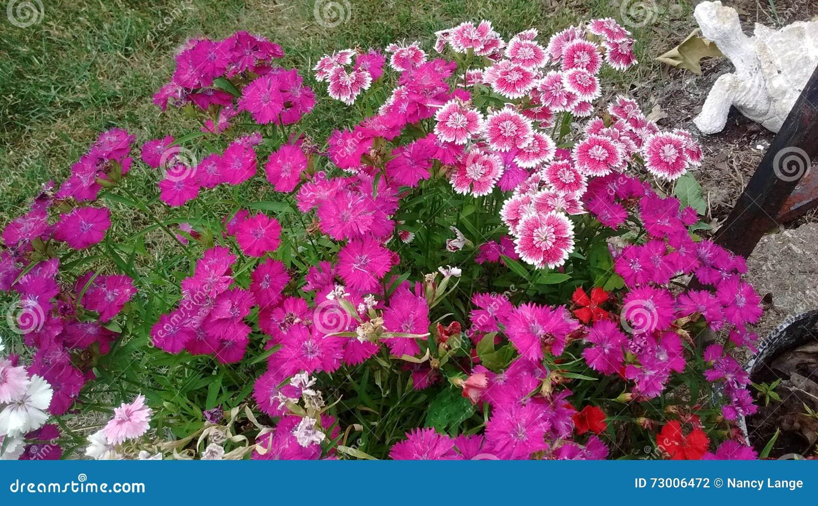 Blumen In Einem Blumentopf In Meinem Vorgarten Stockfoto Bild Von