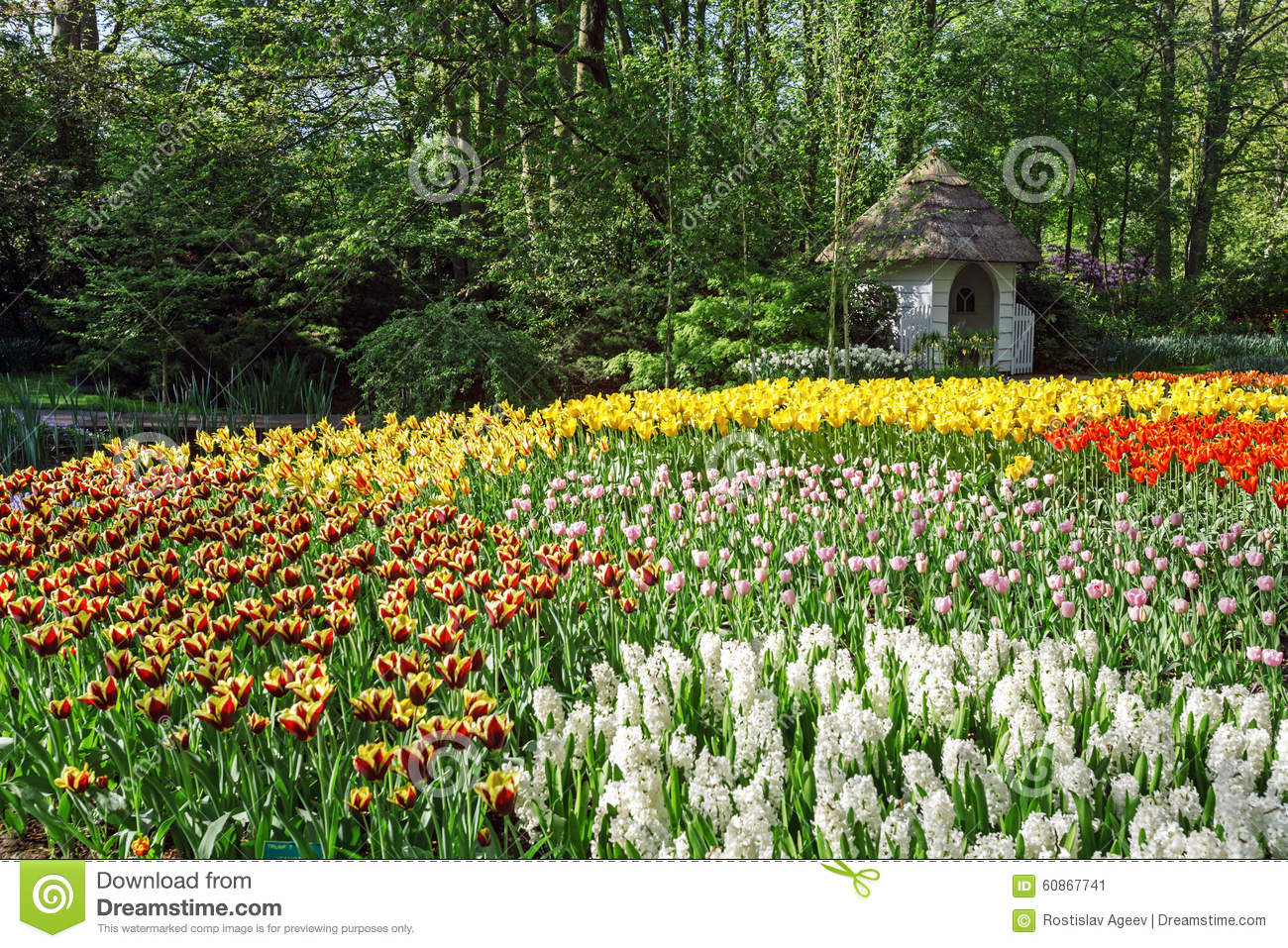 blumen garten keukenhof amsterdam stockfoto bild 60867741. Black Bedroom Furniture Sets. Home Design Ideas