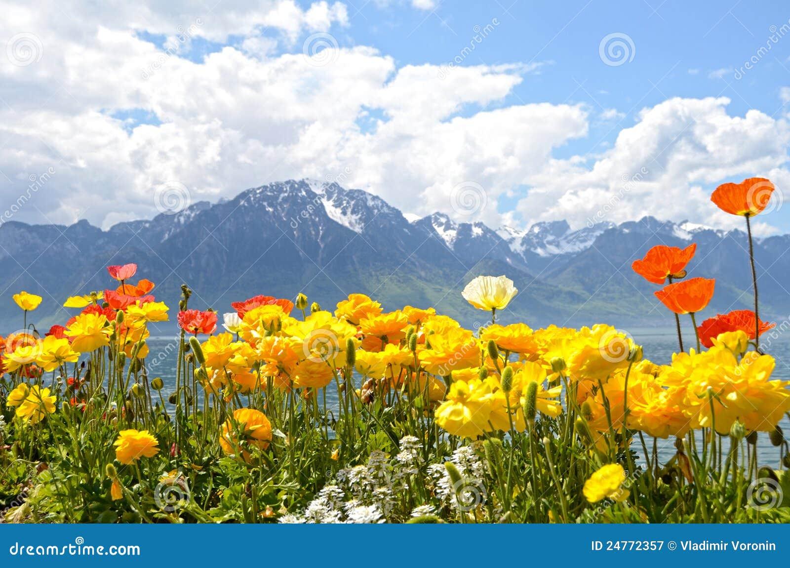 blumen gegen berge und see genf stockbild bild von alpin landschaft 24772357. Black Bedroom Furniture Sets. Home Design Ideas