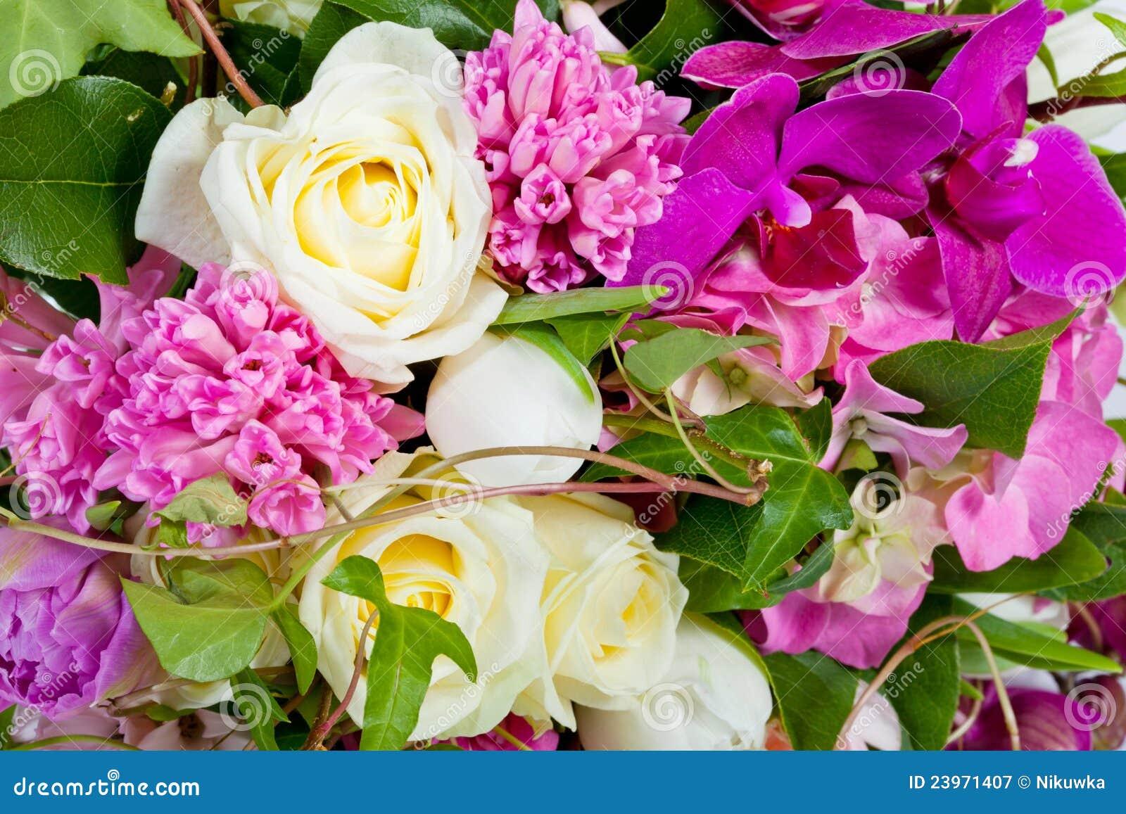 Blumen getrennt auf weißem Hintergrund