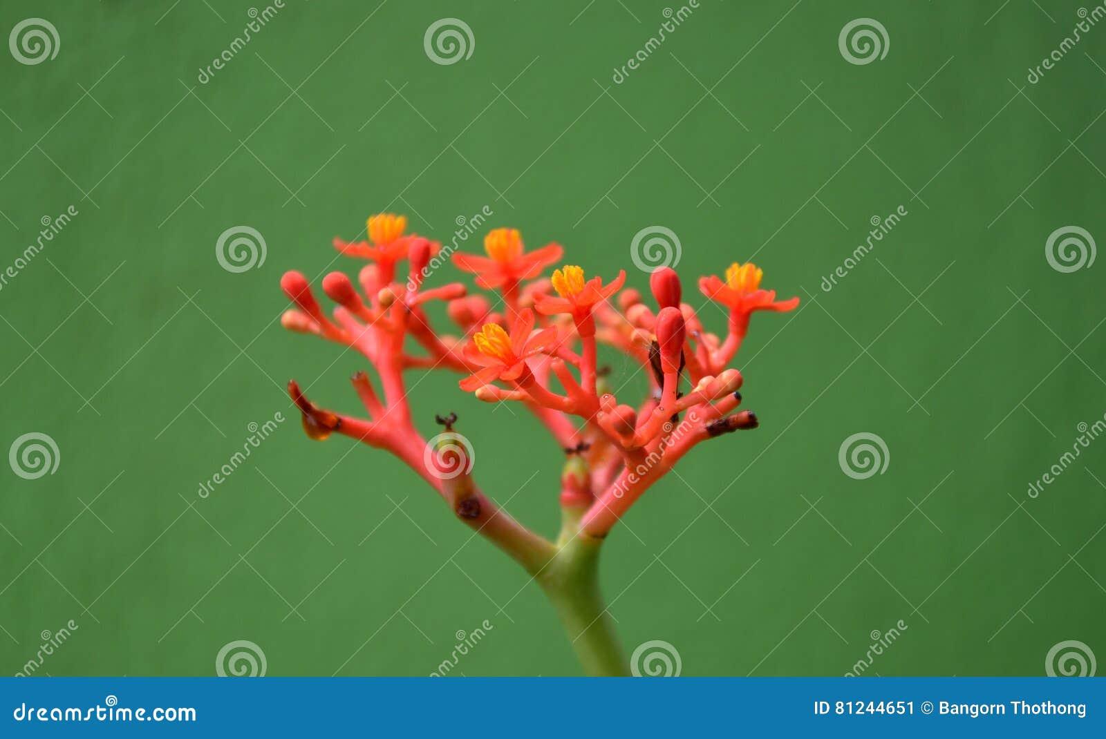 Blumen im Garten und im kleinen Tier