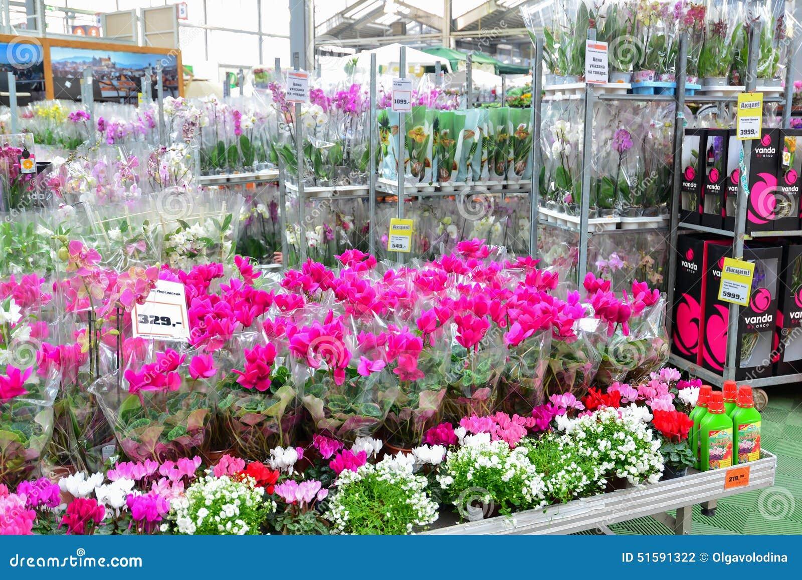 Sehr Blumen Im OBI-Speicher Von Moskau Russland Y Redaktionelles  SJ09