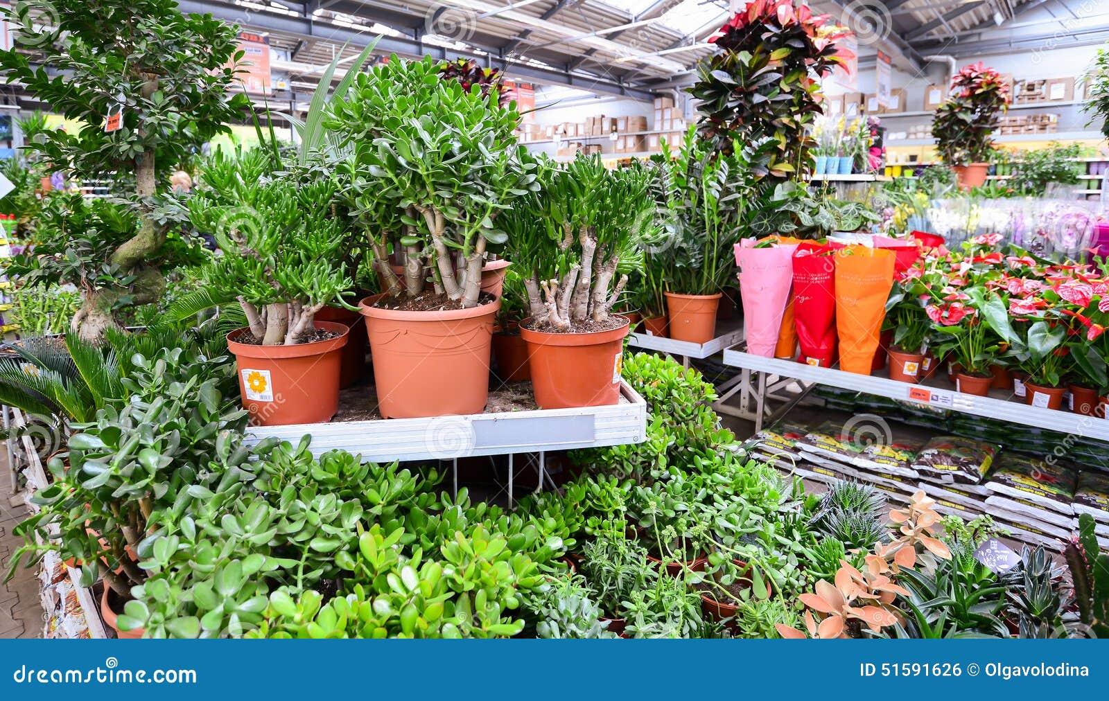 Interessant Blumen Im OBI-Speicher Von Moskau Russland Y Redaktionelles Foto  KO47