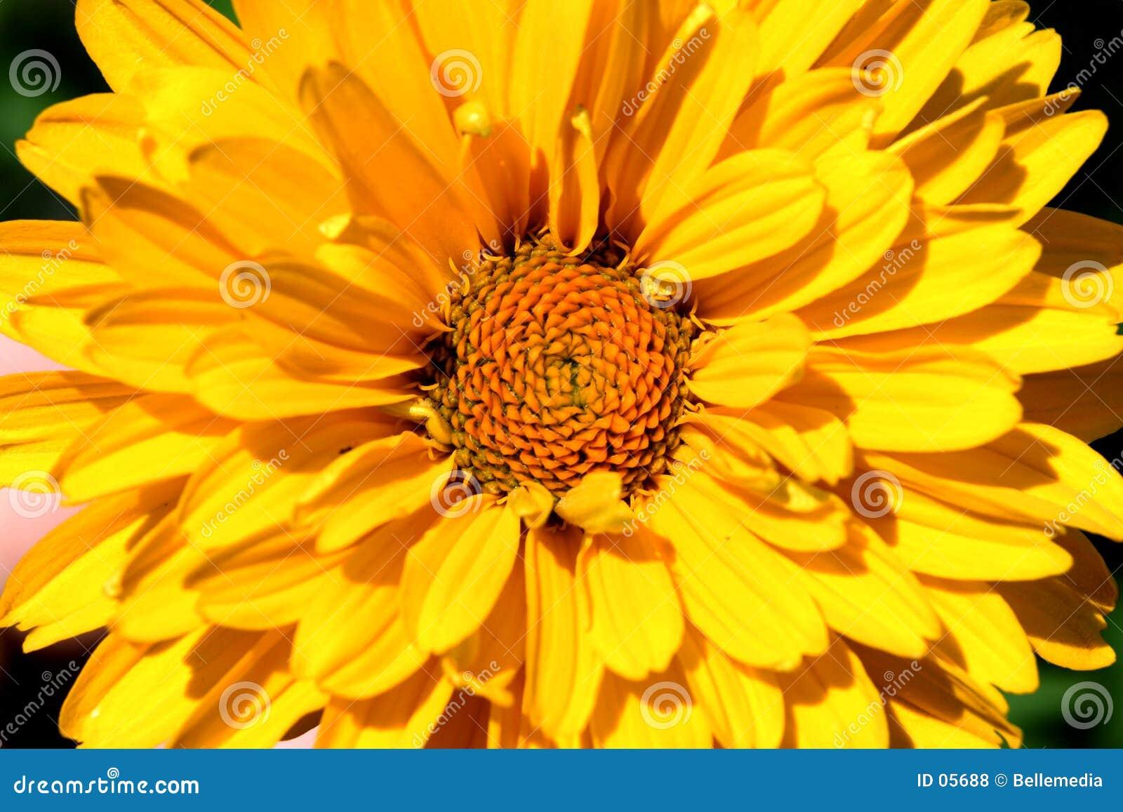 Blumen-Leistung