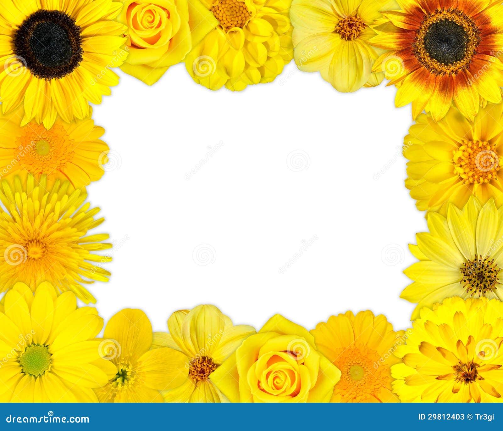 Blumen-Rahmen Mit Gelben Blumen Auf Leerem Hintergrund Stockbild ...