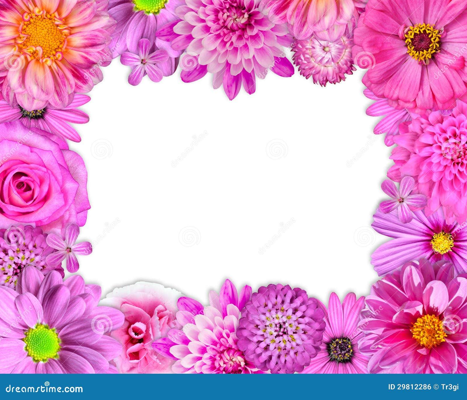 blumen rahmen rosa purpur rote blumen auf wei stockfoto bild 29812286. Black Bedroom Furniture Sets. Home Design Ideas
