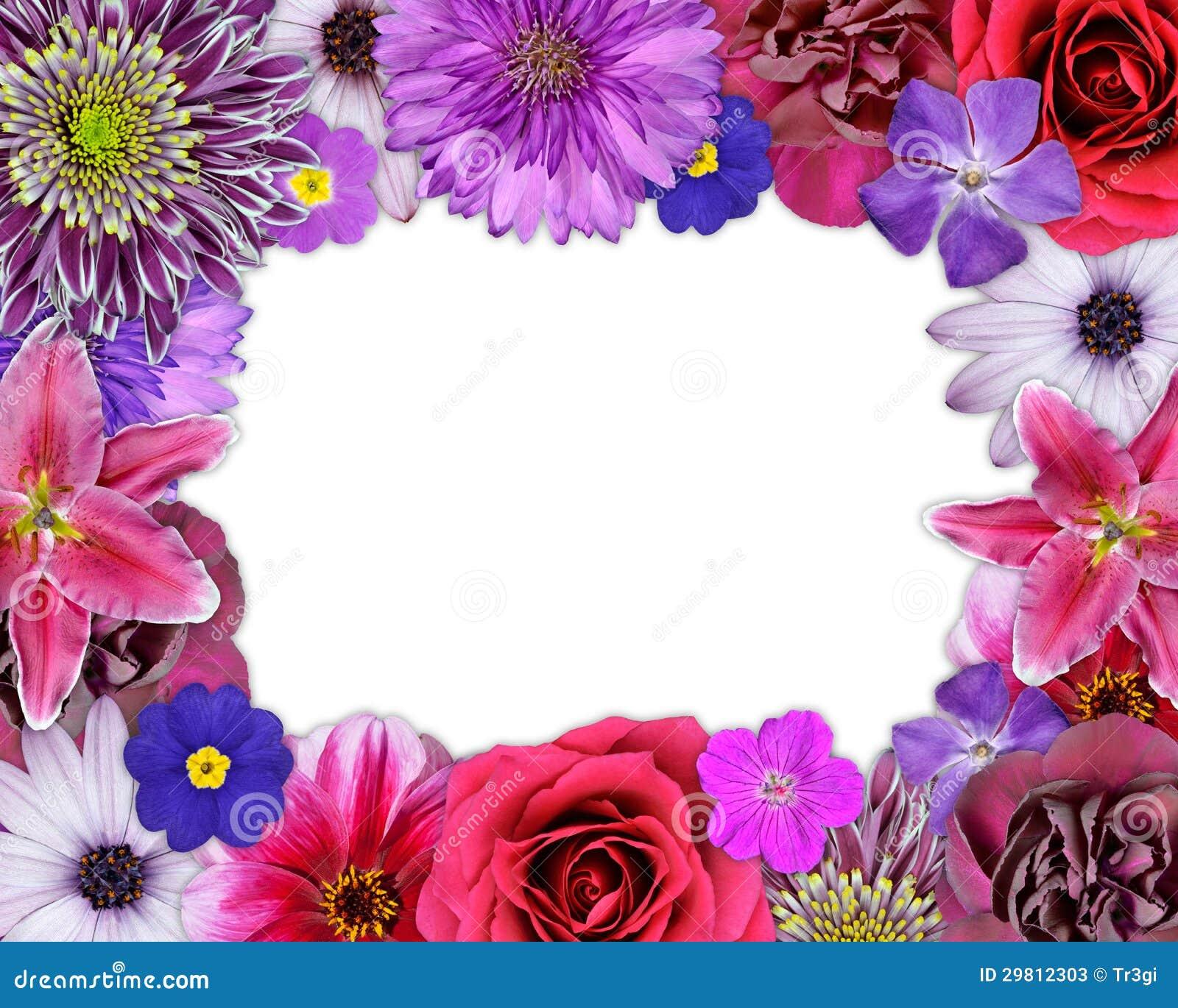 blumen rahmen rosa purpur rote blumen auf wei stockfotos bild 29812303. Black Bedroom Furniture Sets. Home Design Ideas