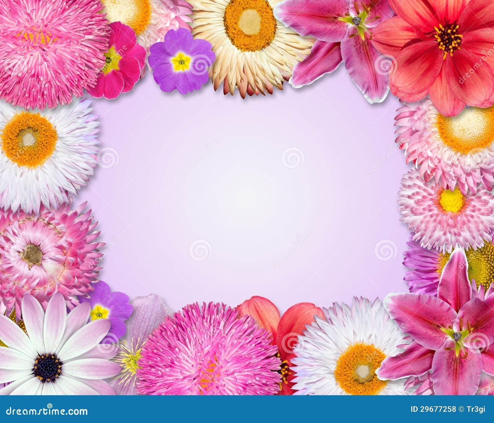 blumen rahmen rosa purpur rote blumen stockfoto bild. Black Bedroom Furniture Sets. Home Design Ideas