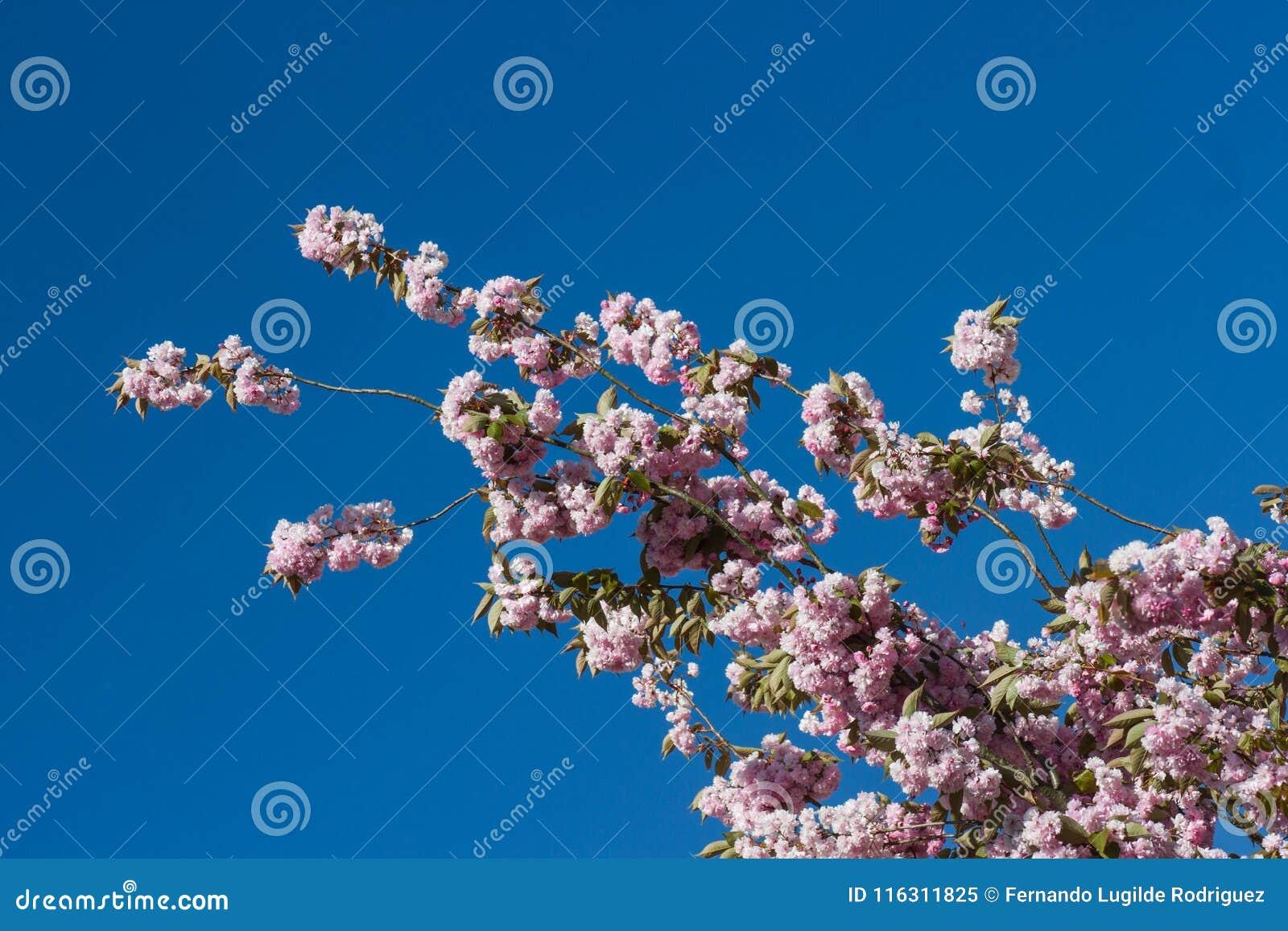 Blumen in Richtung zum Himmel