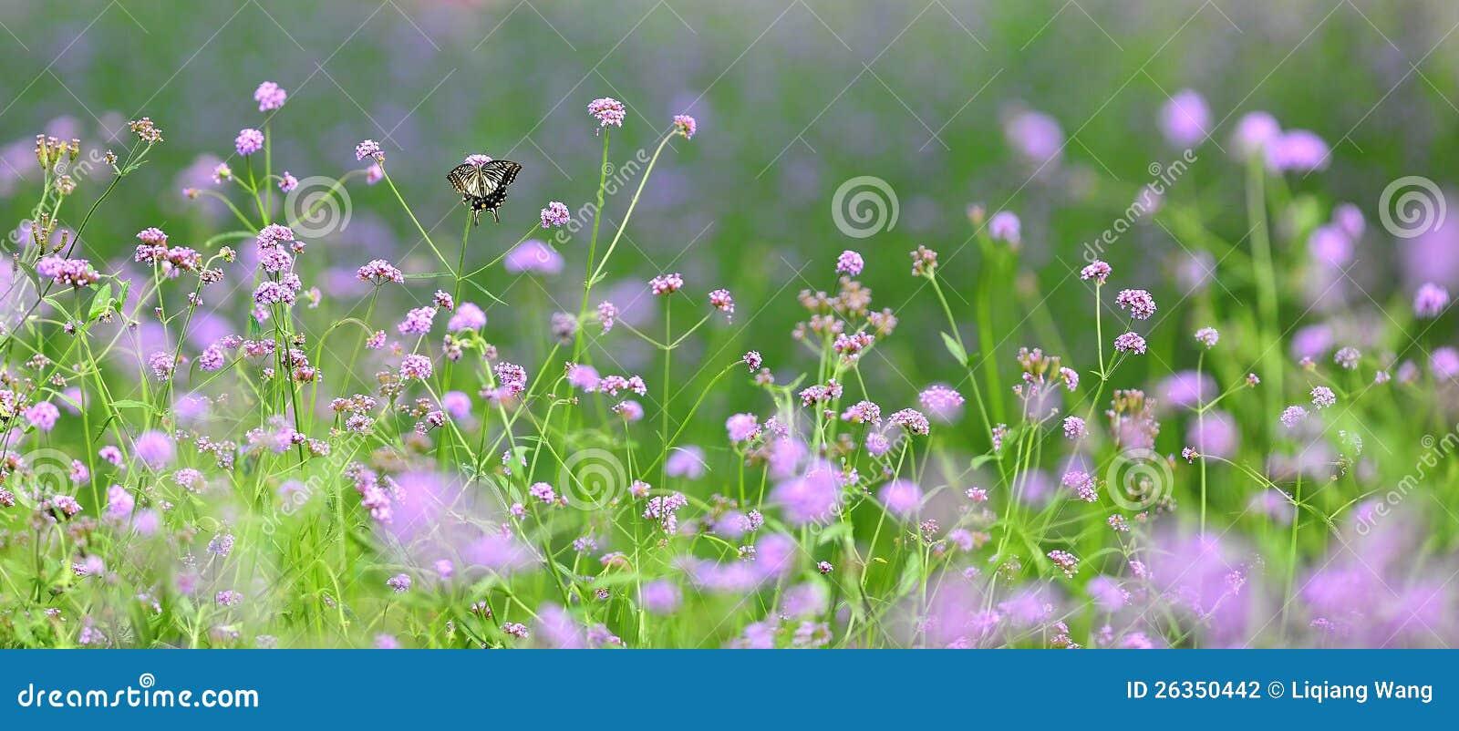 Blumen und Anlagen