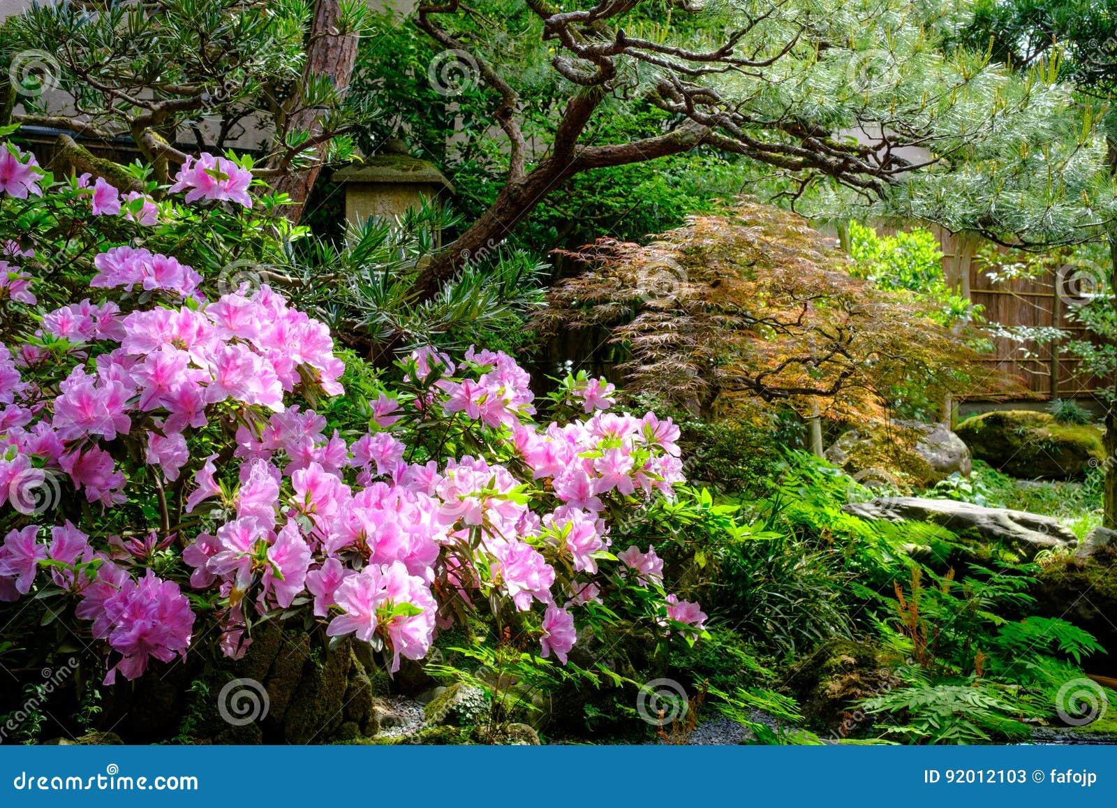 Blumen Und Bäume In Einem Japanischen Garten Stockbild Bild Von