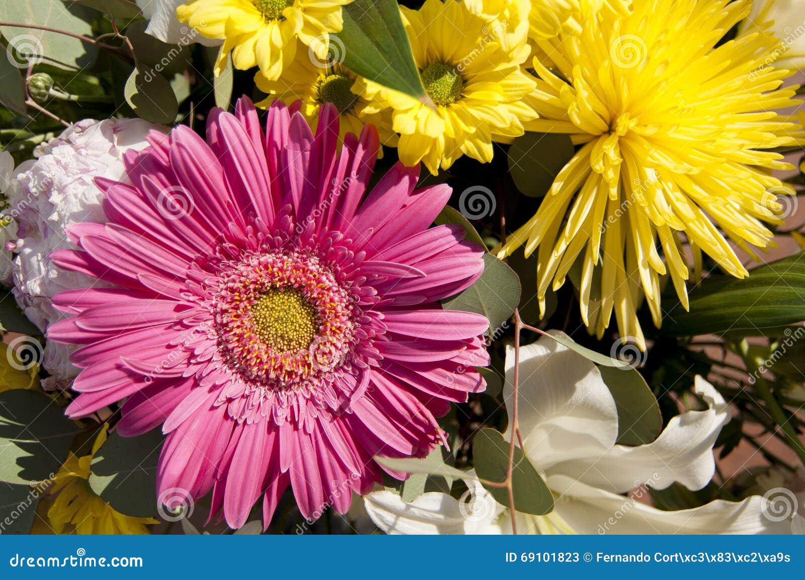 Blumen Und Gänseblümchen Mit Den Großen Blumenblättern Und Den ...