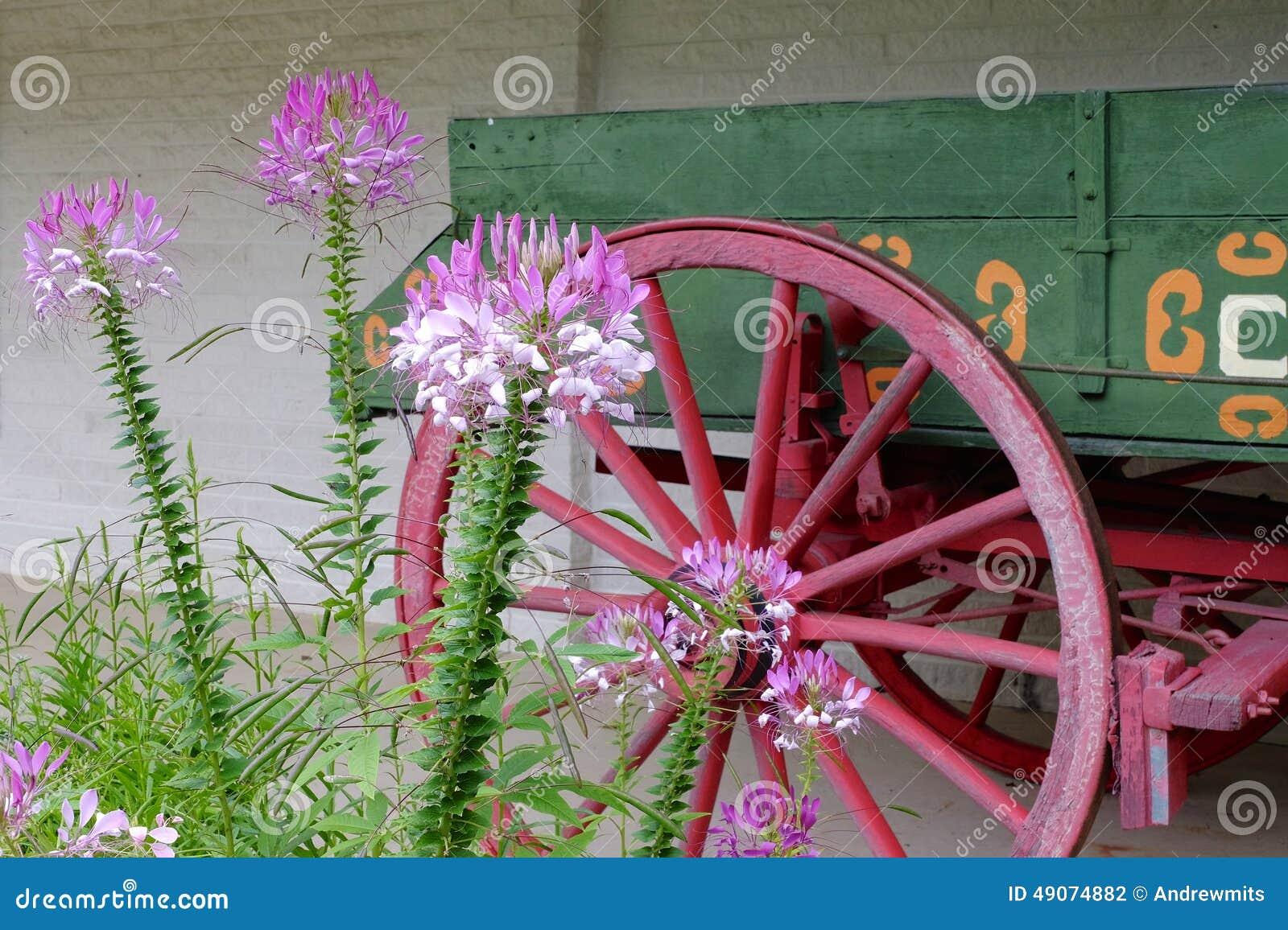 Blumen und Lastwagen-Rad
