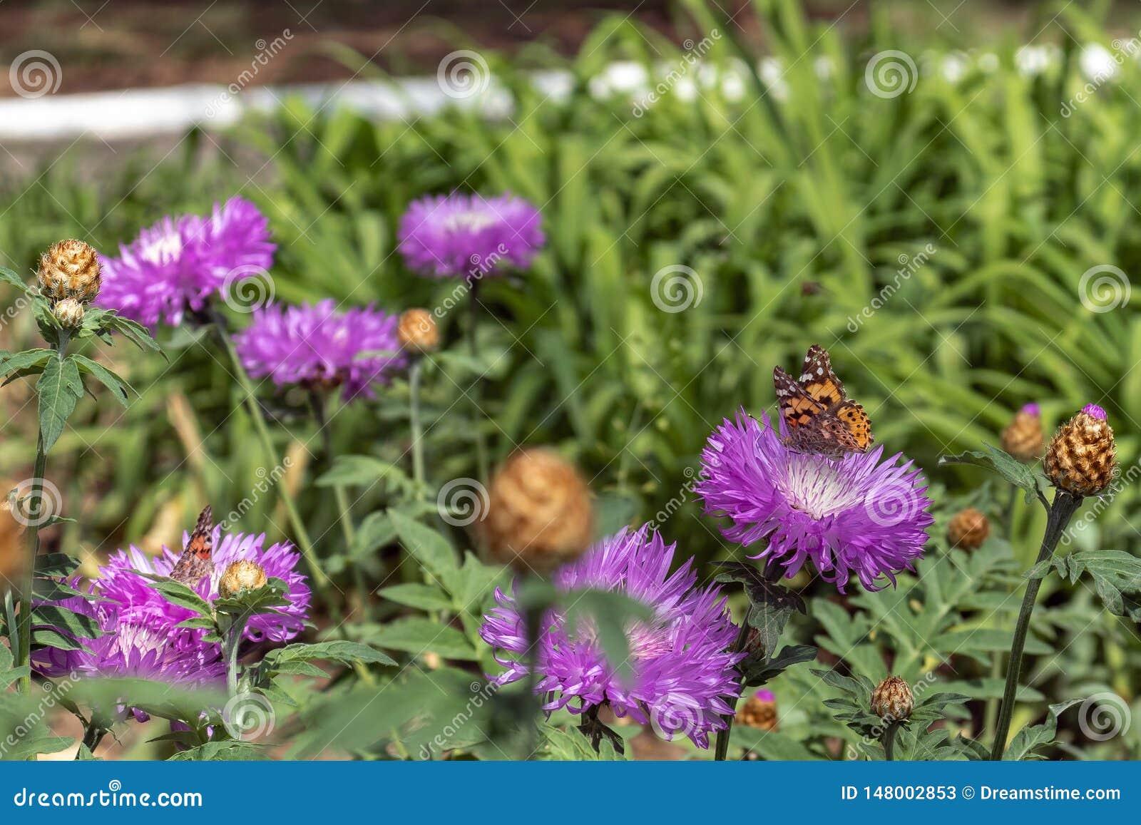 Blumen und Schmetterlinge