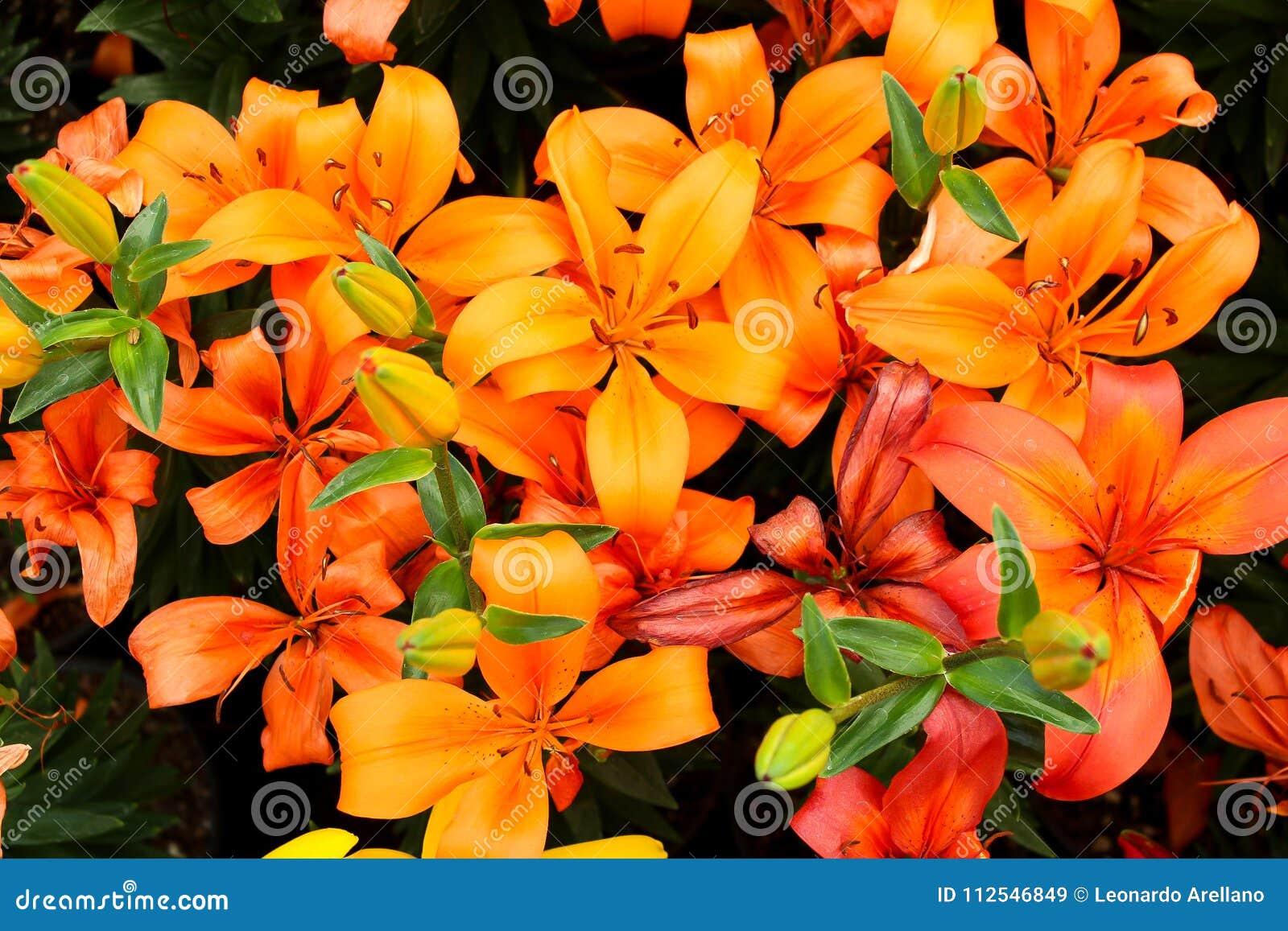 Blumen von Atlixco