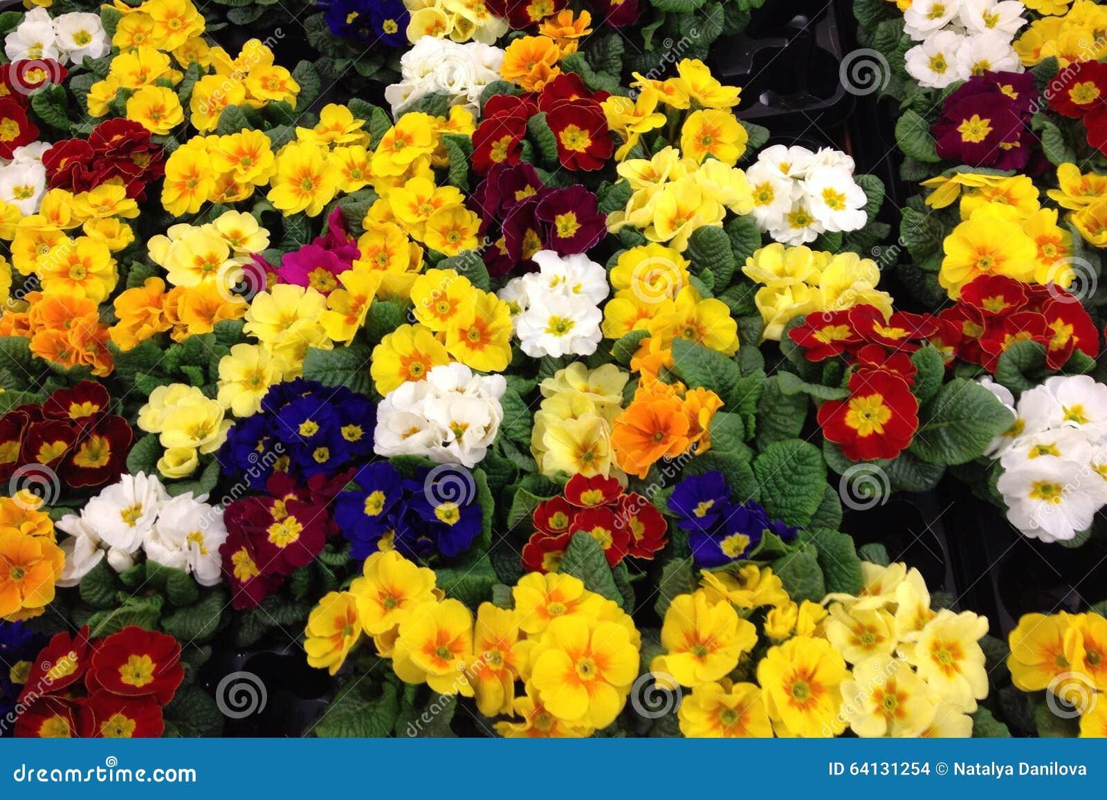 Blumen Von Verschiedenen Farben Stockfoto - Bild von unterschiedlich ...
