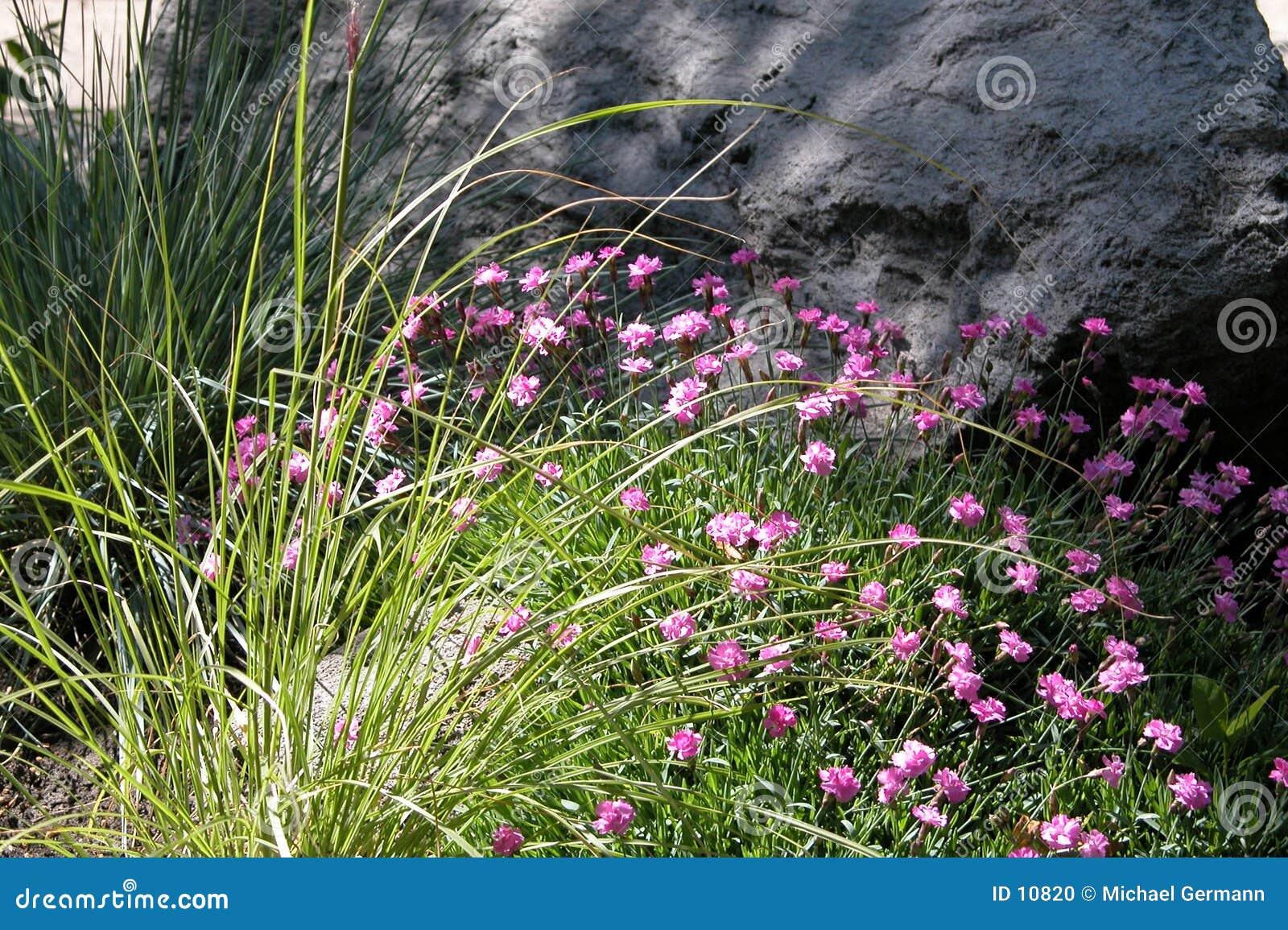 Blumen vor Felsen