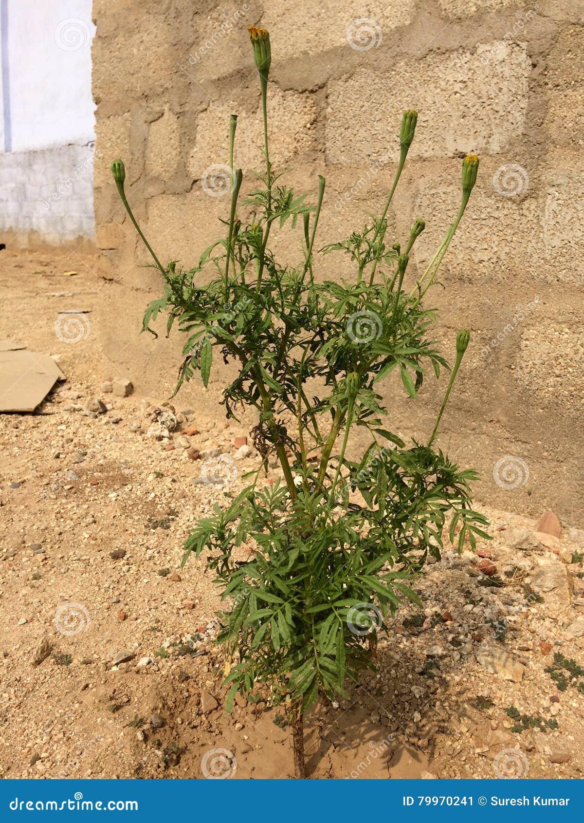 Blumenanlage