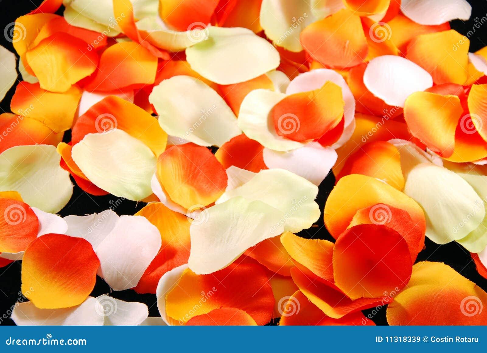 Blumenblätter