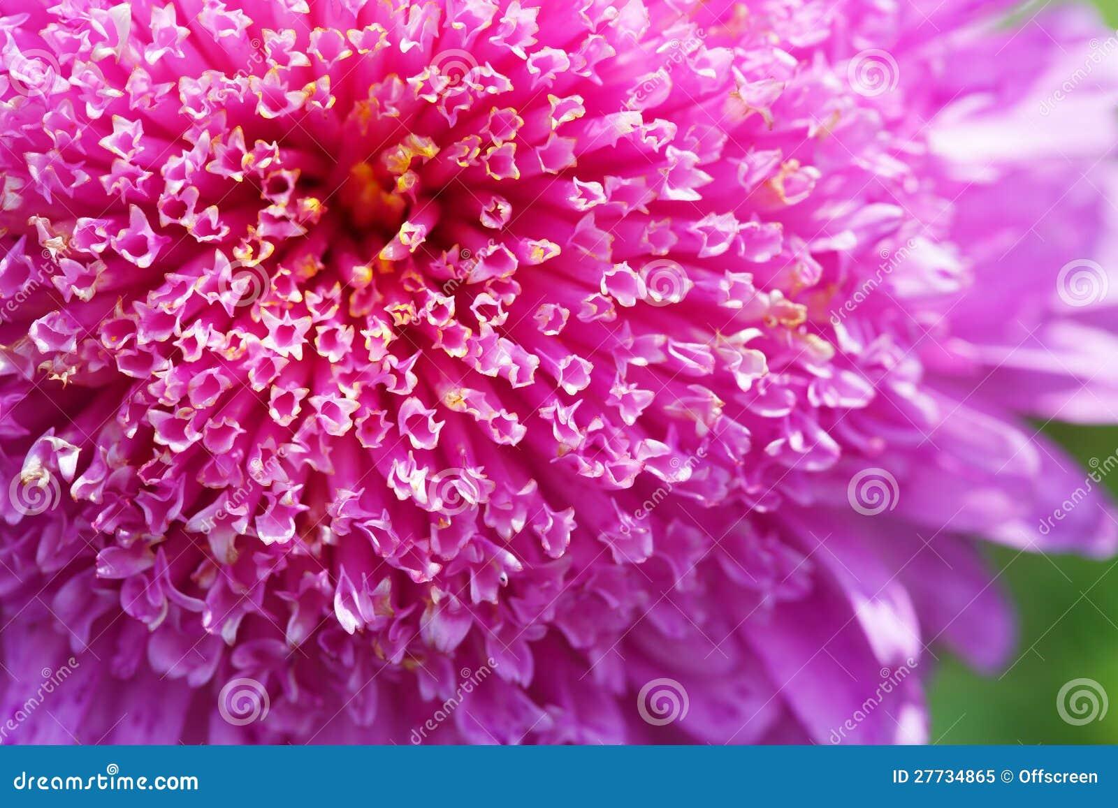 Blumenblätter der Blume