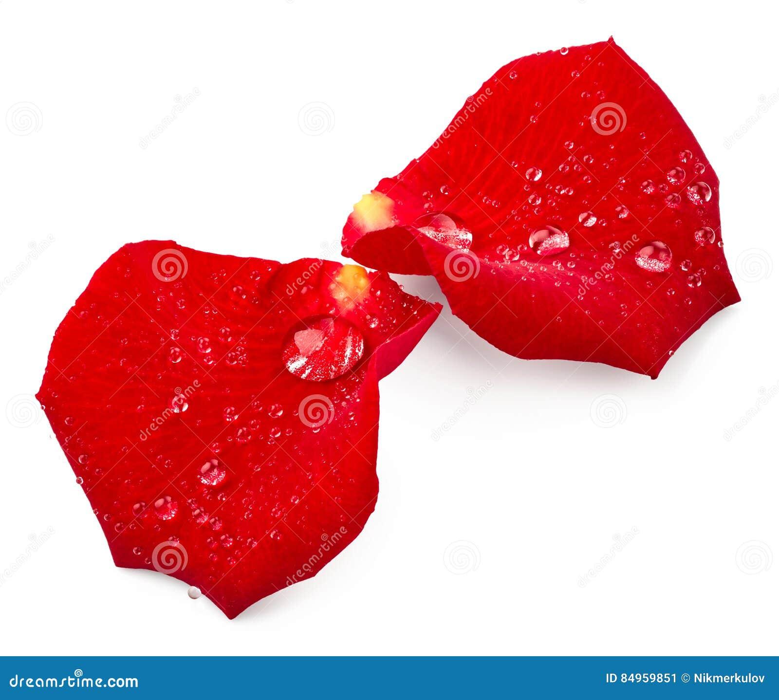 Blumenblätter des Rotes stiegen