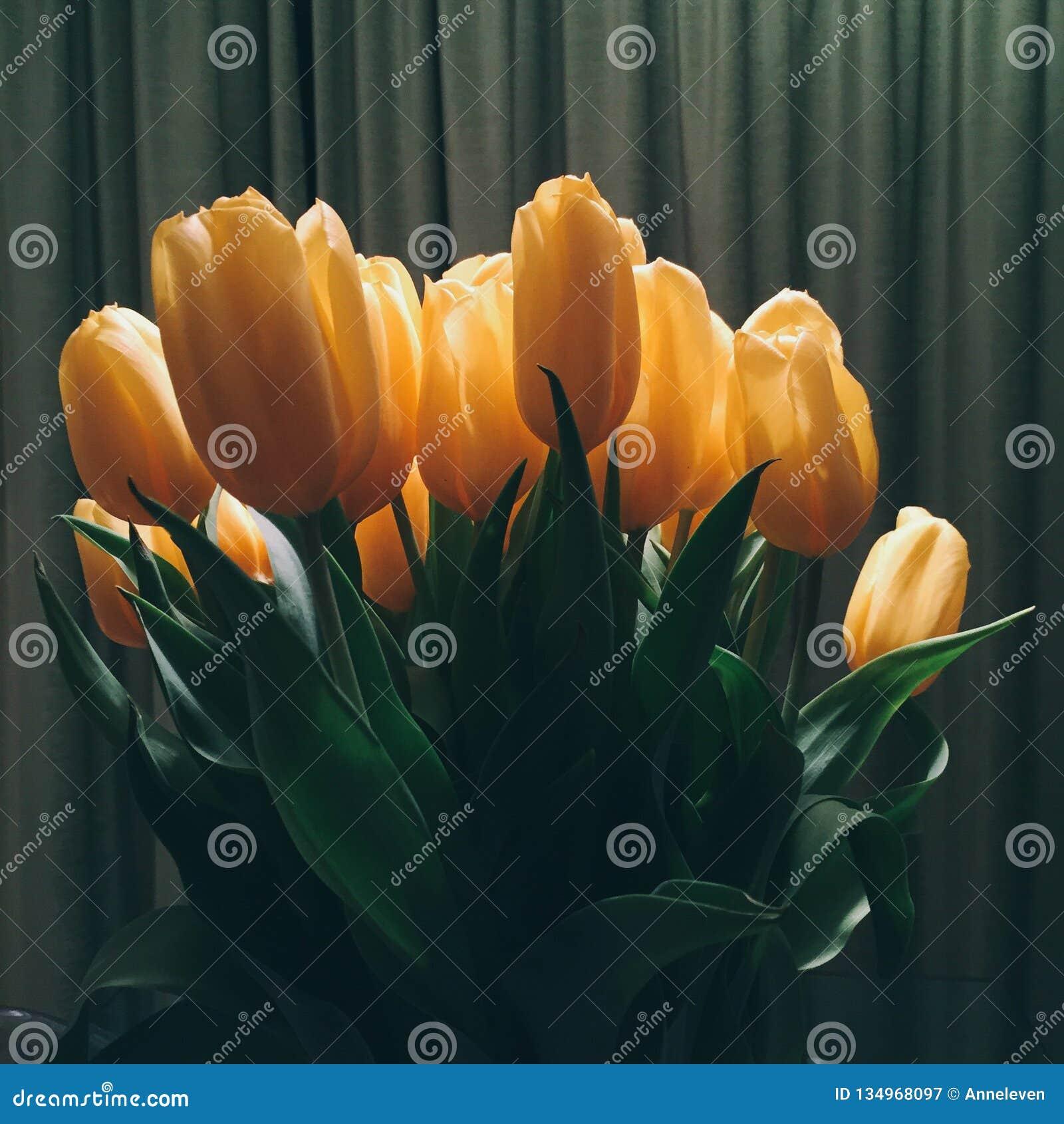 Blumenblüte - Hochzeit, Feiertag und Blumengarten redeten Konzept an