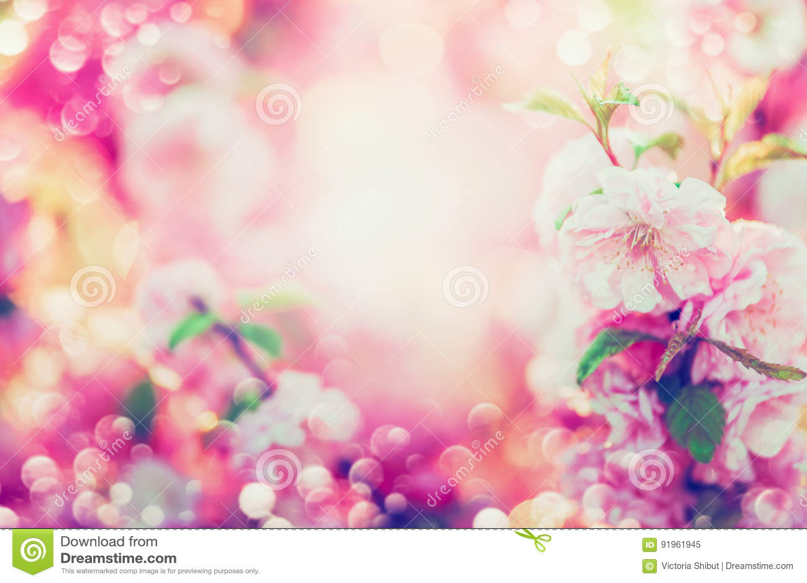 Blumenhintergrund des schönen Sommers mit dem rosa Blühen, Sonnenglanz
