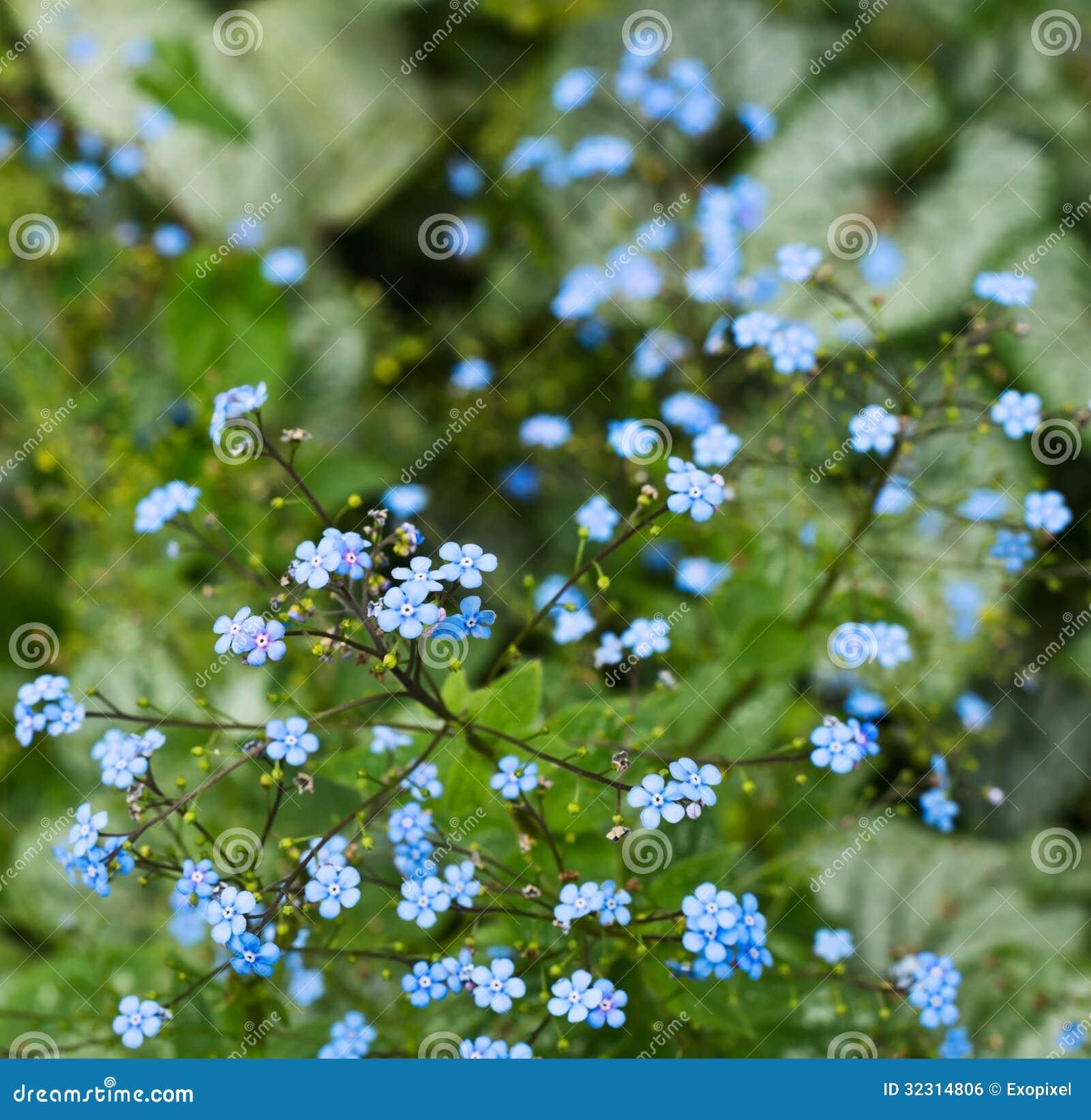 blumenhintergrund schoss von kleine blaue blumen stockfoto bild von floral nahaufnahme 32314806. Black Bedroom Furniture Sets. Home Design Ideas