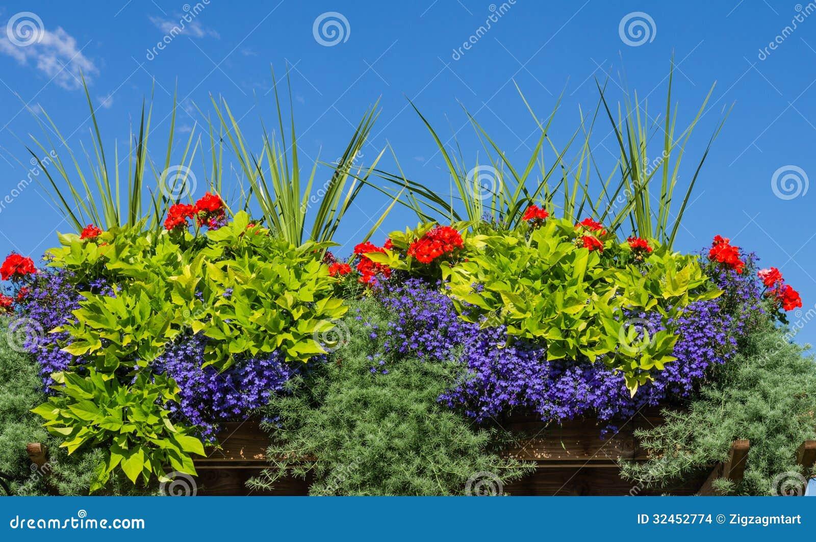 Blumenkasten mit blühenden Pflanzen
