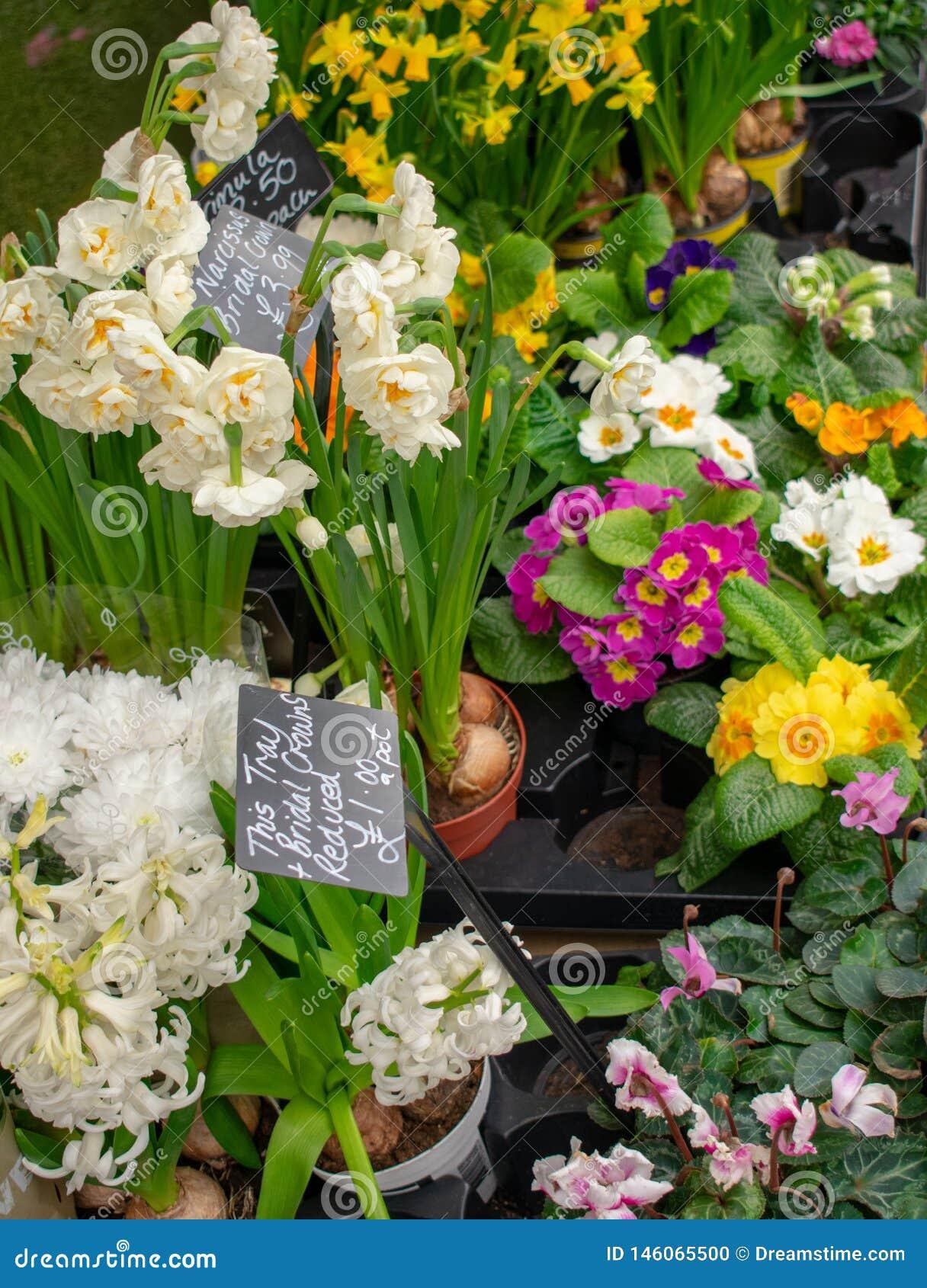 Blumenmarkt mit den Rosa-, weißen und Gelbenblumen