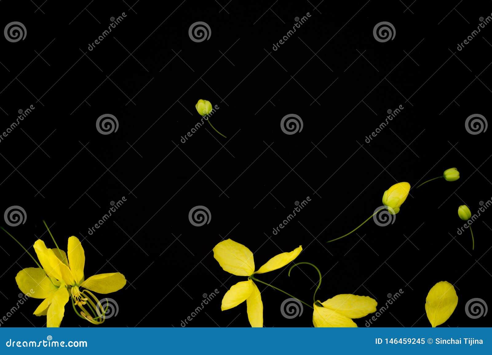 Blumenschwarzhintergrund taxture und wallpeper der nahen hohen Natur gelbes