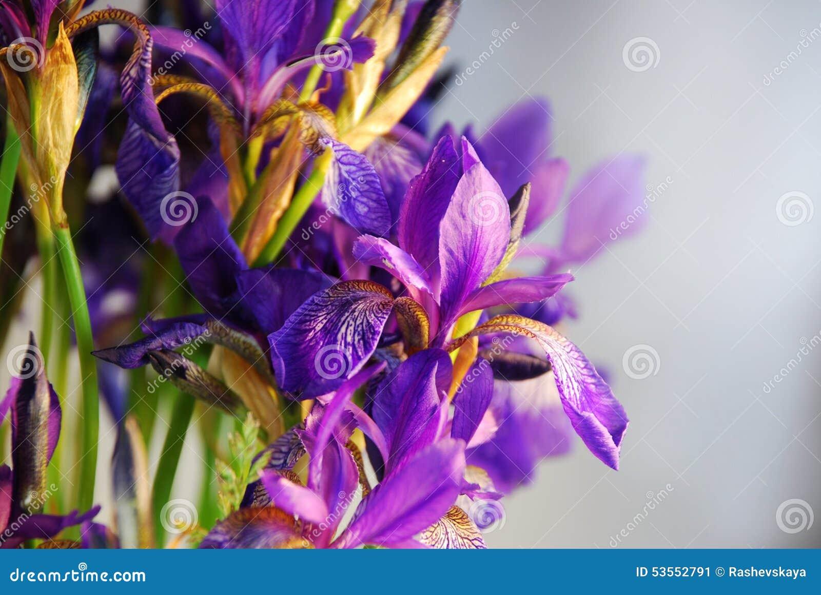 Blumenstrauß der Blenden