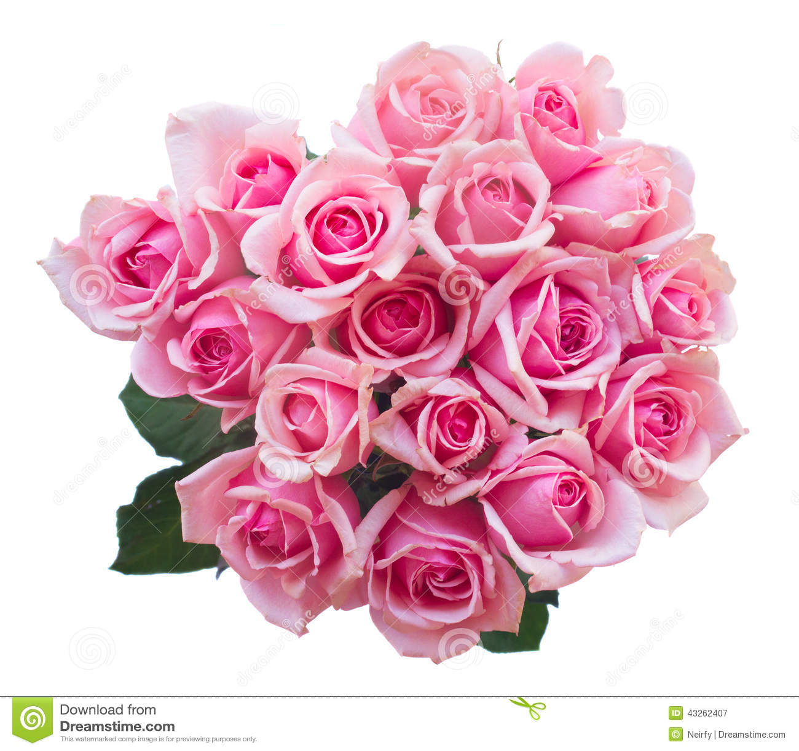 blumenstrauß der frischen rosa rosen stockbild  bild von