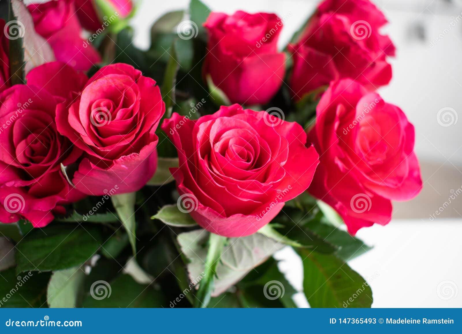 Blumenstrauß der roten Rosen mit einer rosa Note Zuhause mit weißem Hintergrund