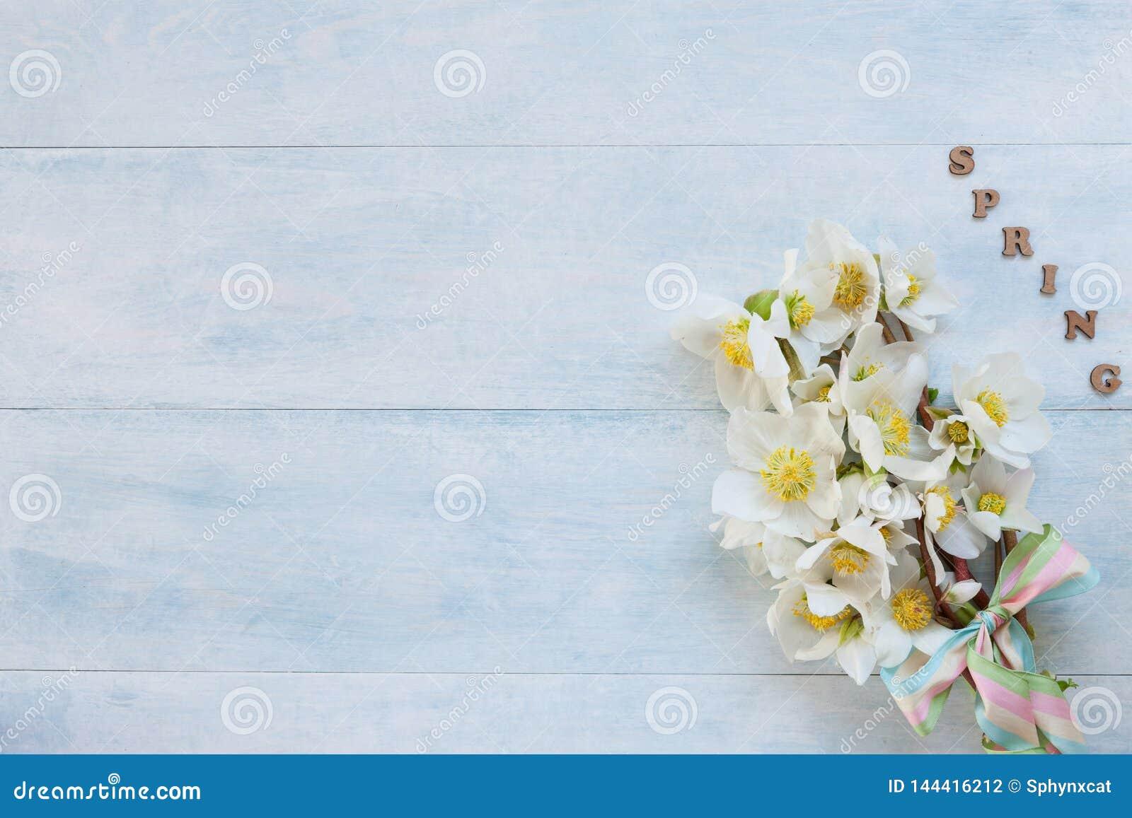Blumenstrauß des Nahaufnahmefotos A von frischen Frühling Helleboreblumen auf hellblauem hölzernem Hintergrund