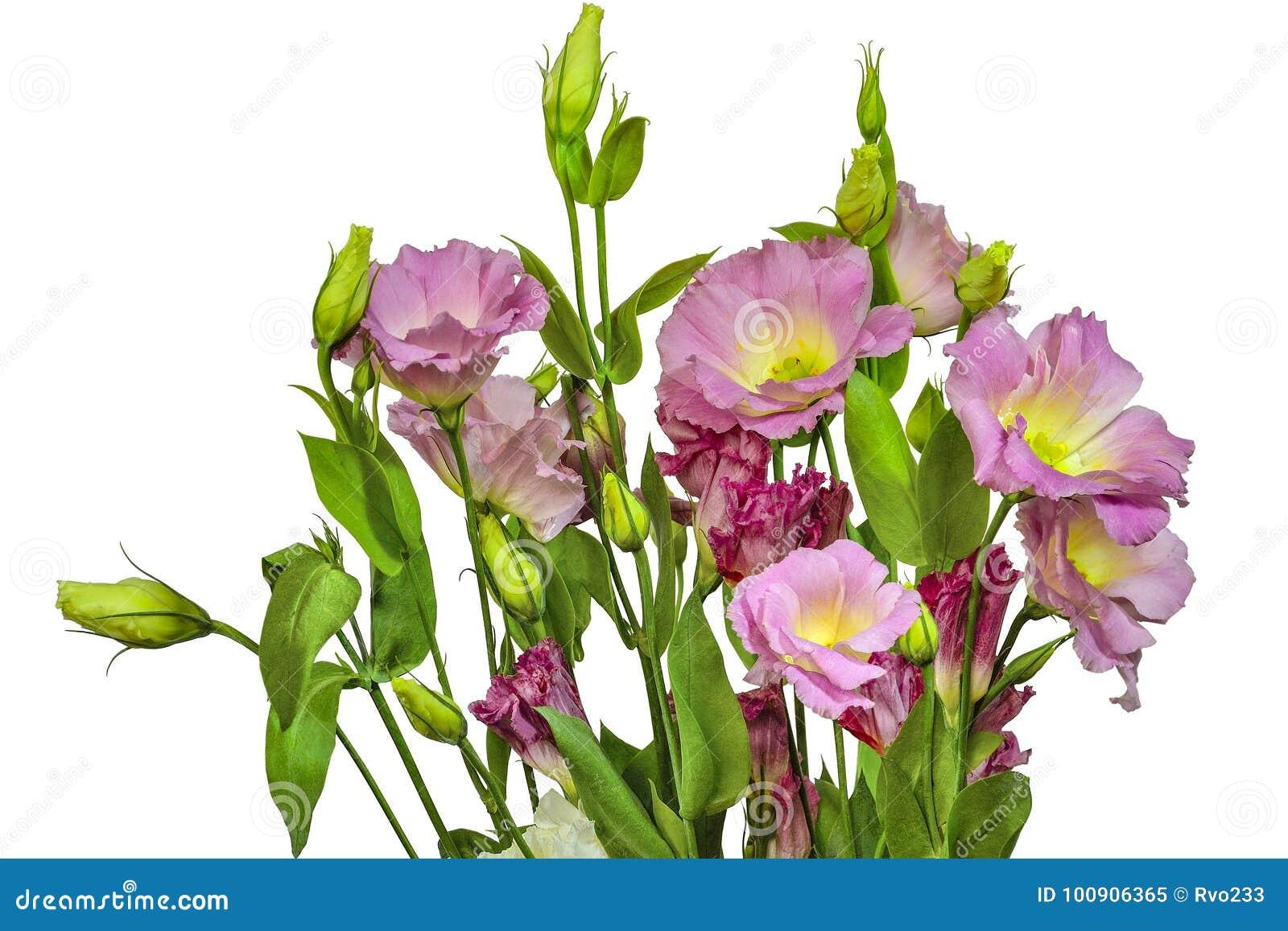 Blumenstrauß des zarten Rosas mit gelbem Eustoma Lisianthus blüht