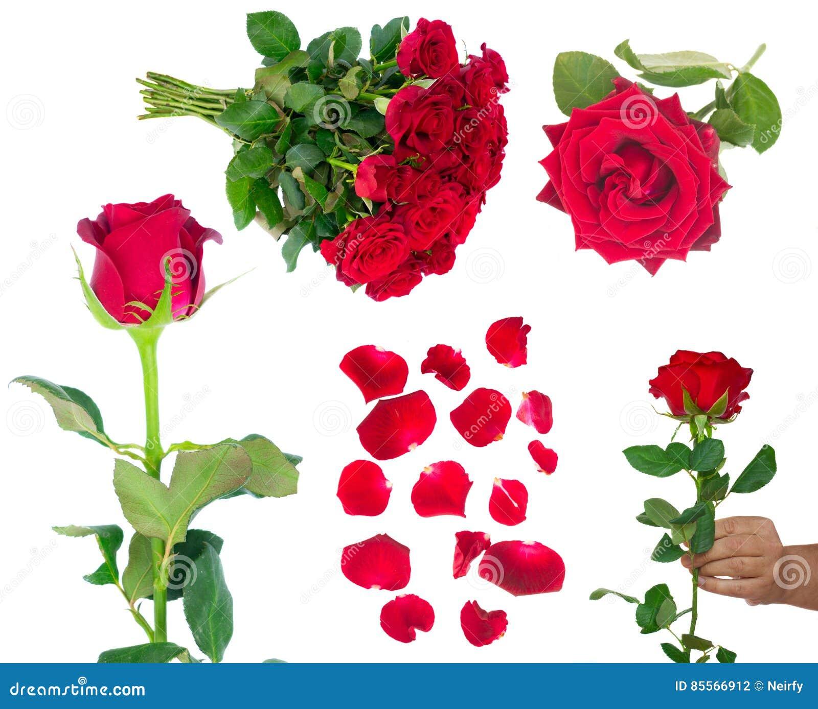 Blumenstrauß von blühenden dunkelroten Rosen im Vase
