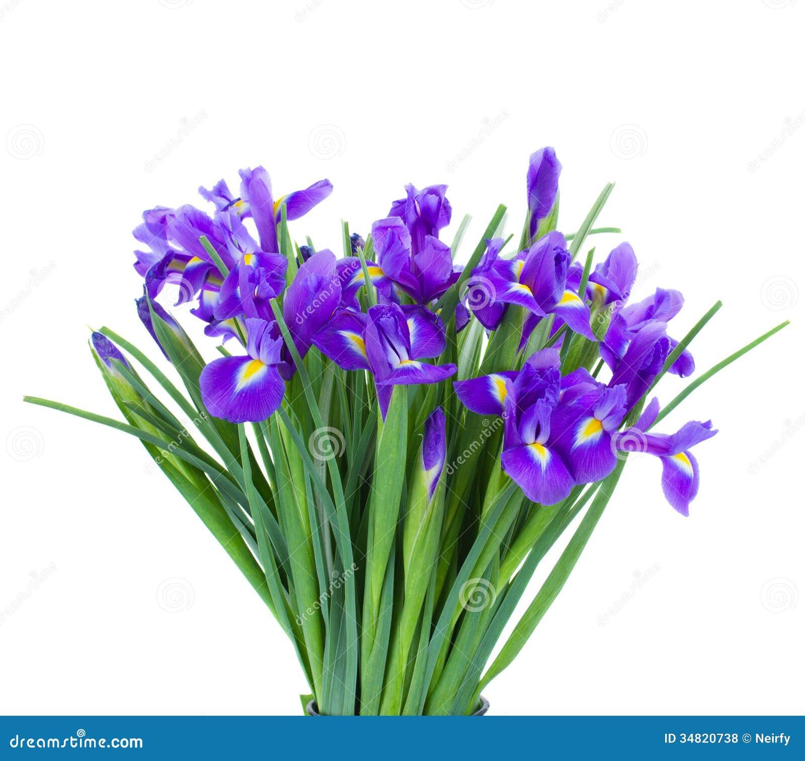 Blumenstrauß von blauen irise Blumen