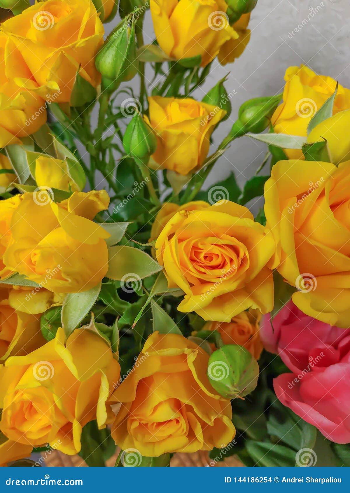 Blumenstrauß von Blumenrosen und von zwei Tulpen in einem
