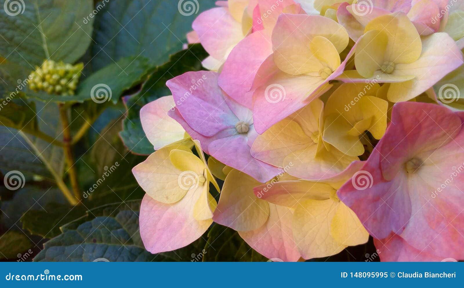 Blumenstrau? von mehrfarbigen Blumen