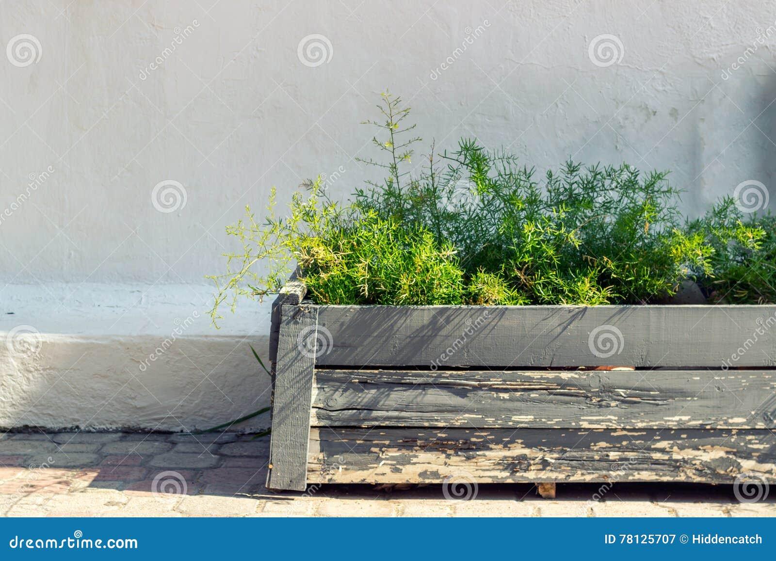 blumentopf gegen weiße wand stockbild - bild von flowerpot, farbe