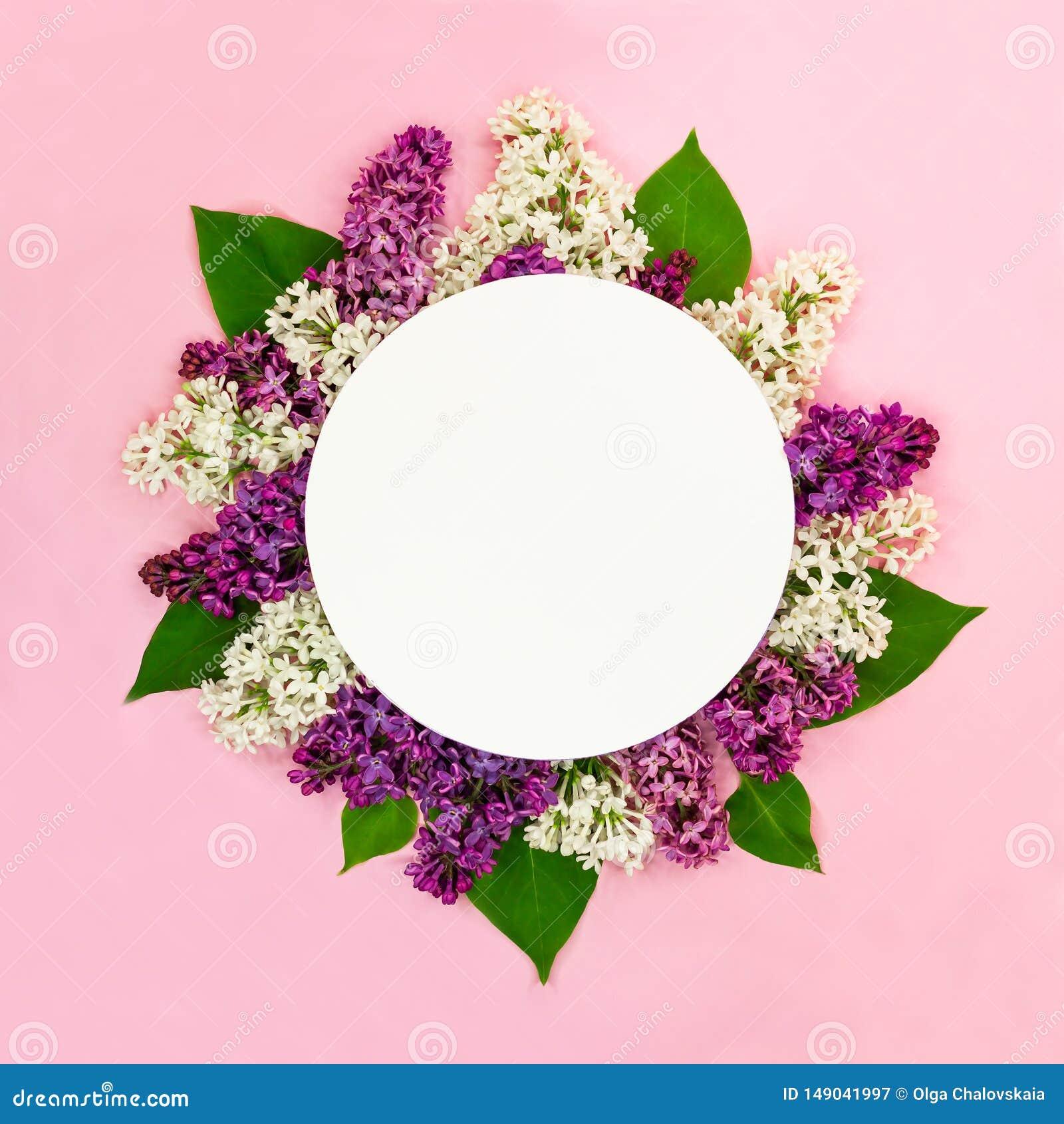 Blumenzusammensetzung der schönen Runde von weißen, purpurroten lila Blumen mit leerer Karte und von Platz für Text auf rosa Hint