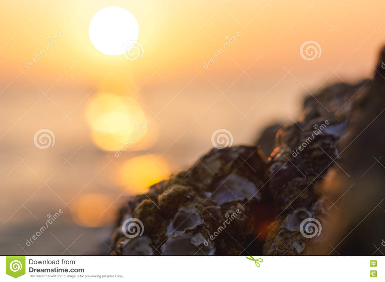 Blur colorful sunset background with shell on the rock closeup, abstract nature